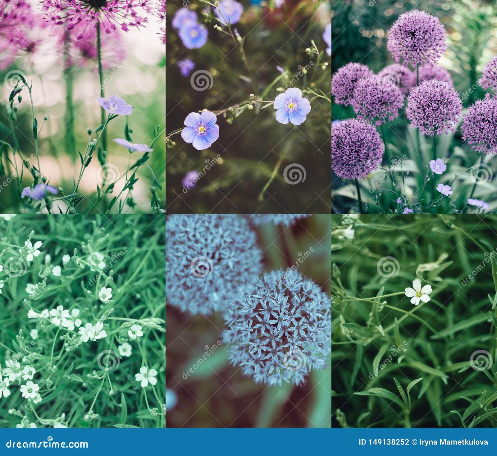 Miscela porpora del collage del fiore