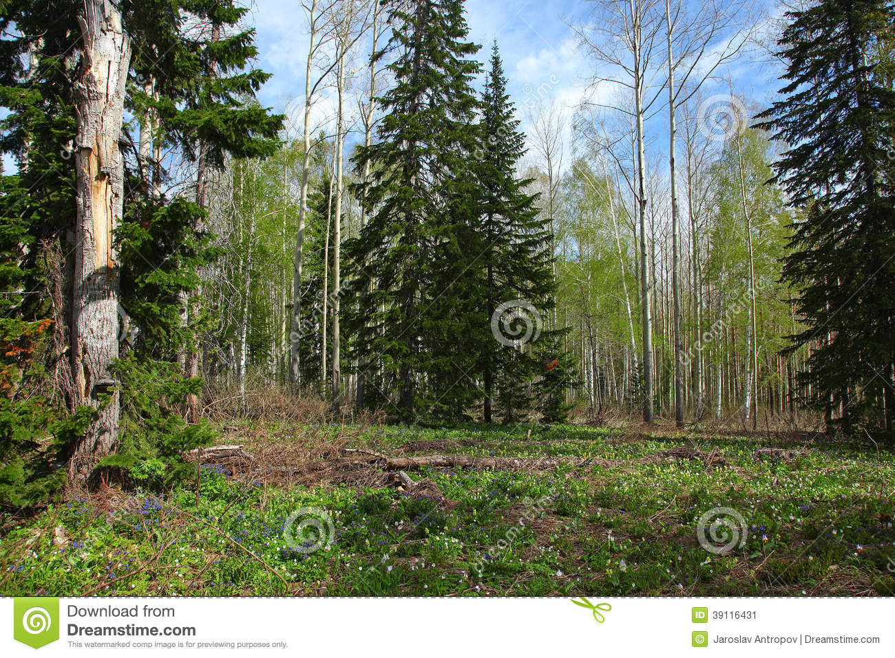 Miscellaneous forest at spring