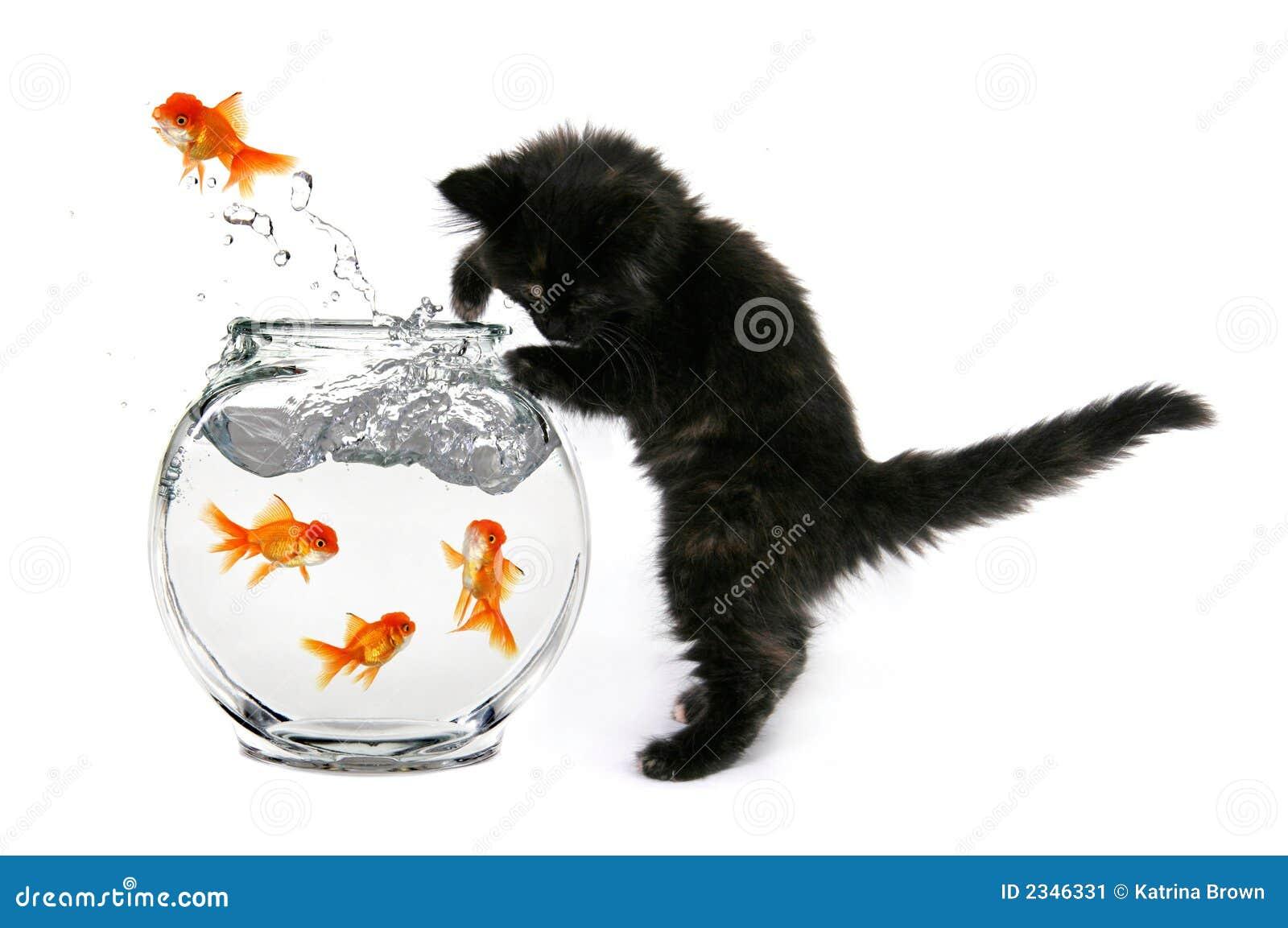 Mischeivious kattunge