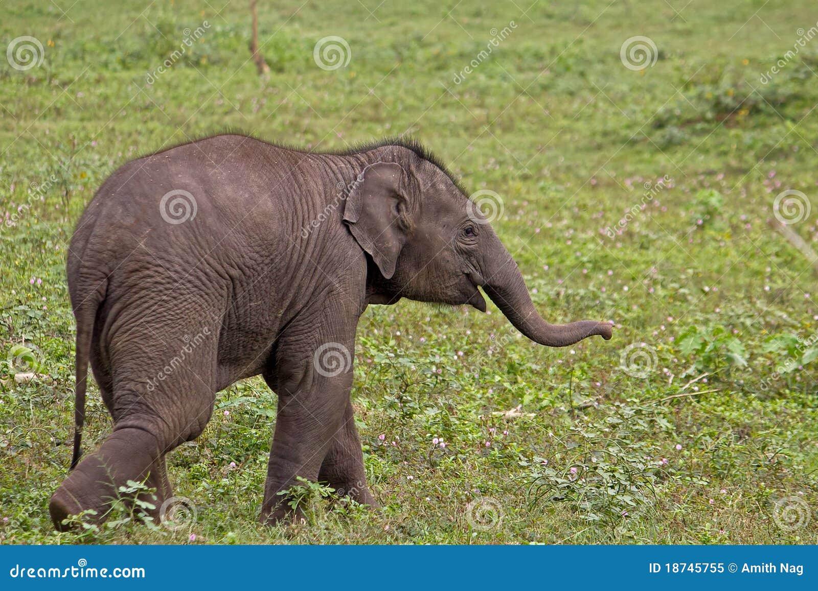 mischief stock image  image of india  550d  green  mammal