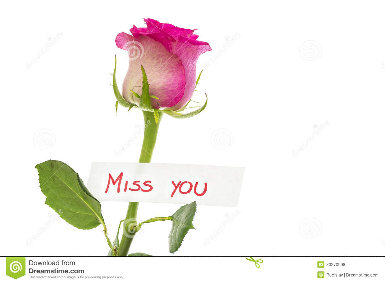miss you message stock photo image of fragility flower