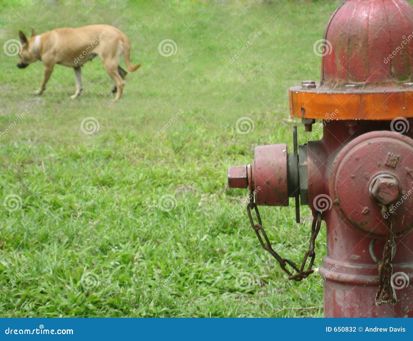 boy peeing on hydrant jpg 1200x900