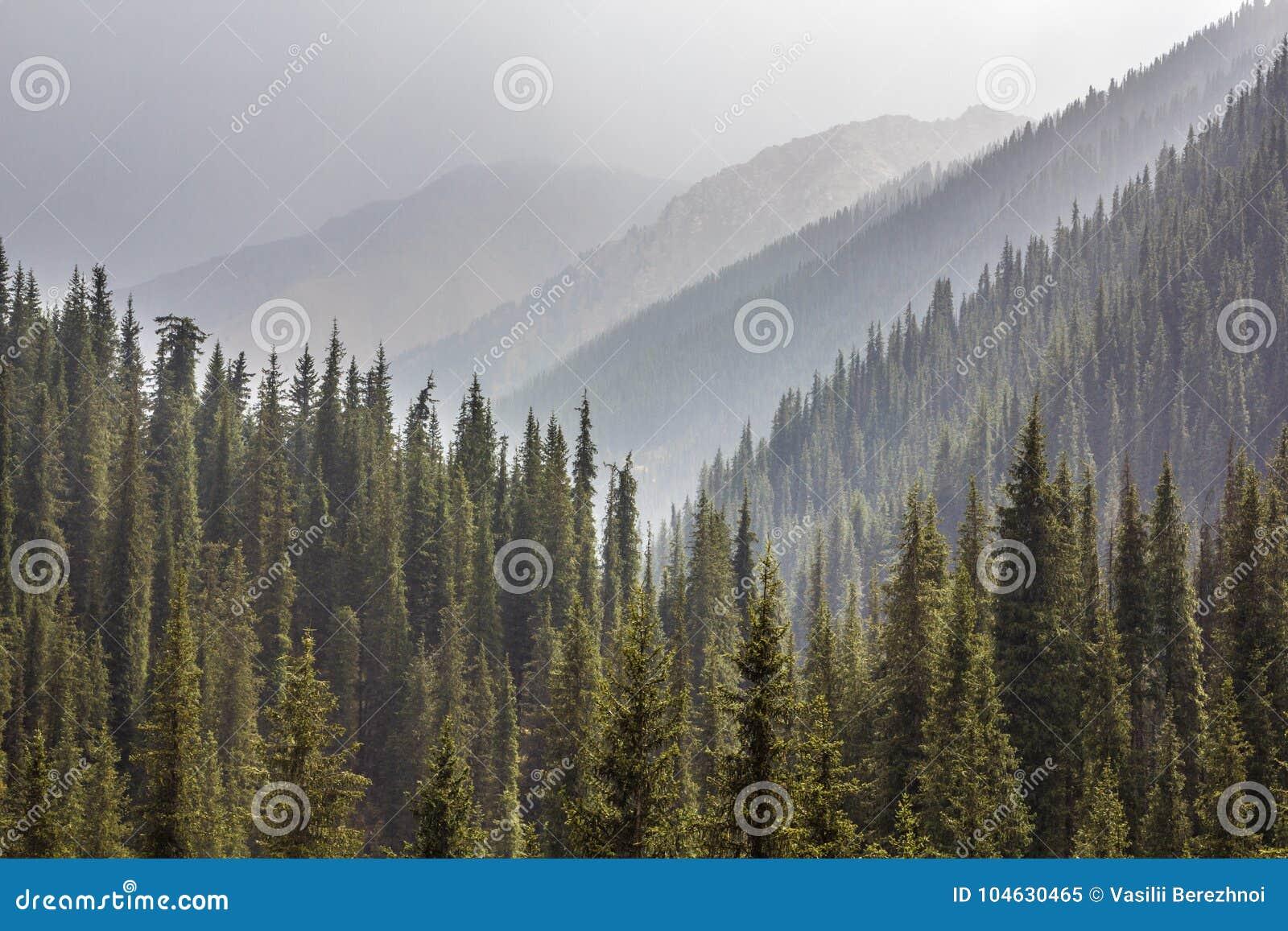 Download Mist in bos stock afbeelding. Afbeelding bestaande uit boom - 104630465