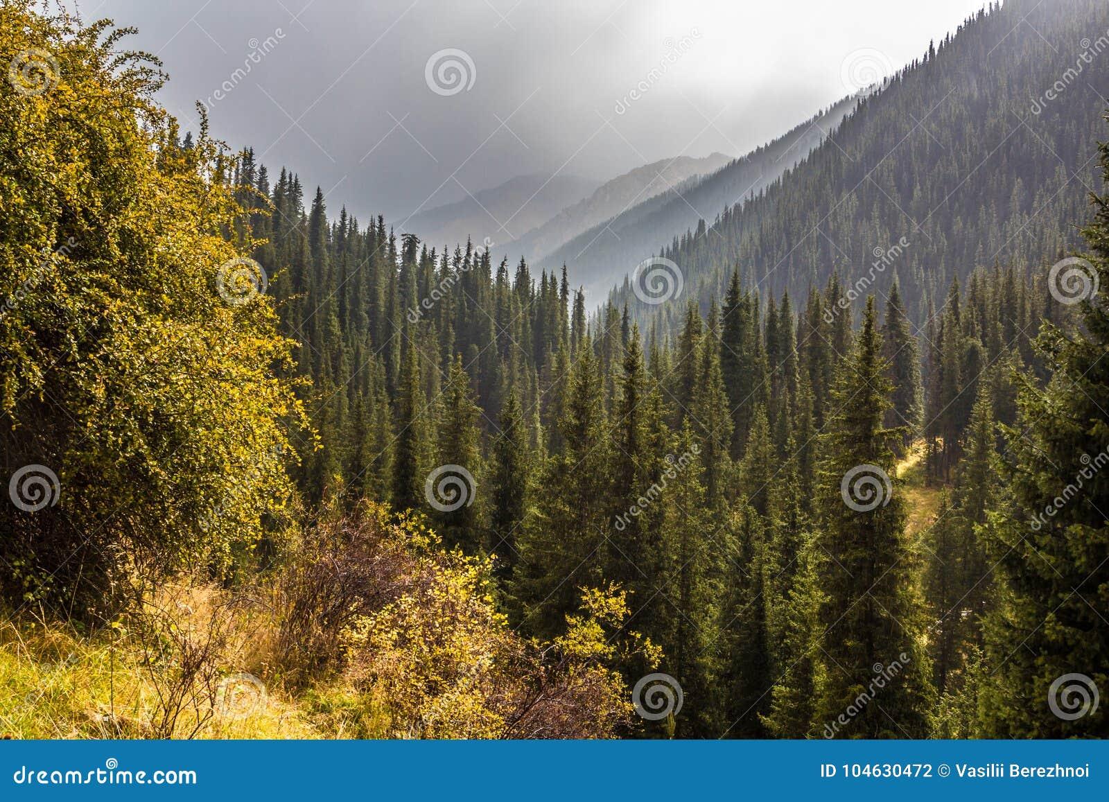 Download Mist in bos stock foto. Afbeelding bestaande uit reis - 104630472