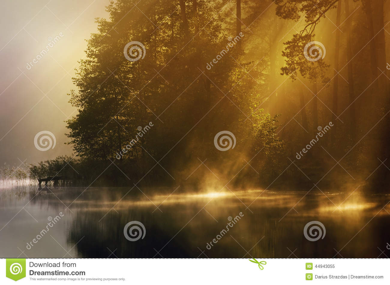 Mist of early morning