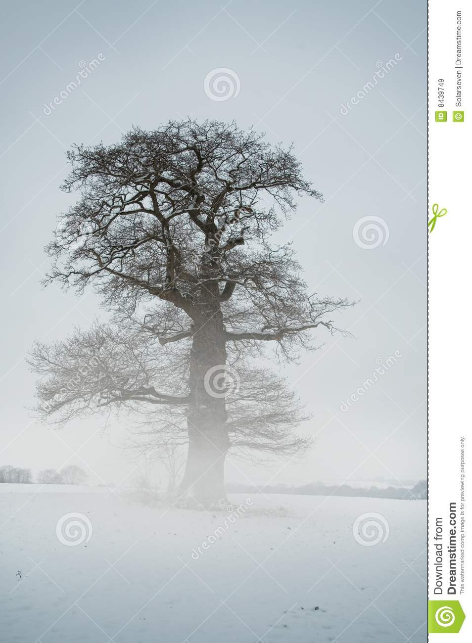 Mist Tree - Winter
