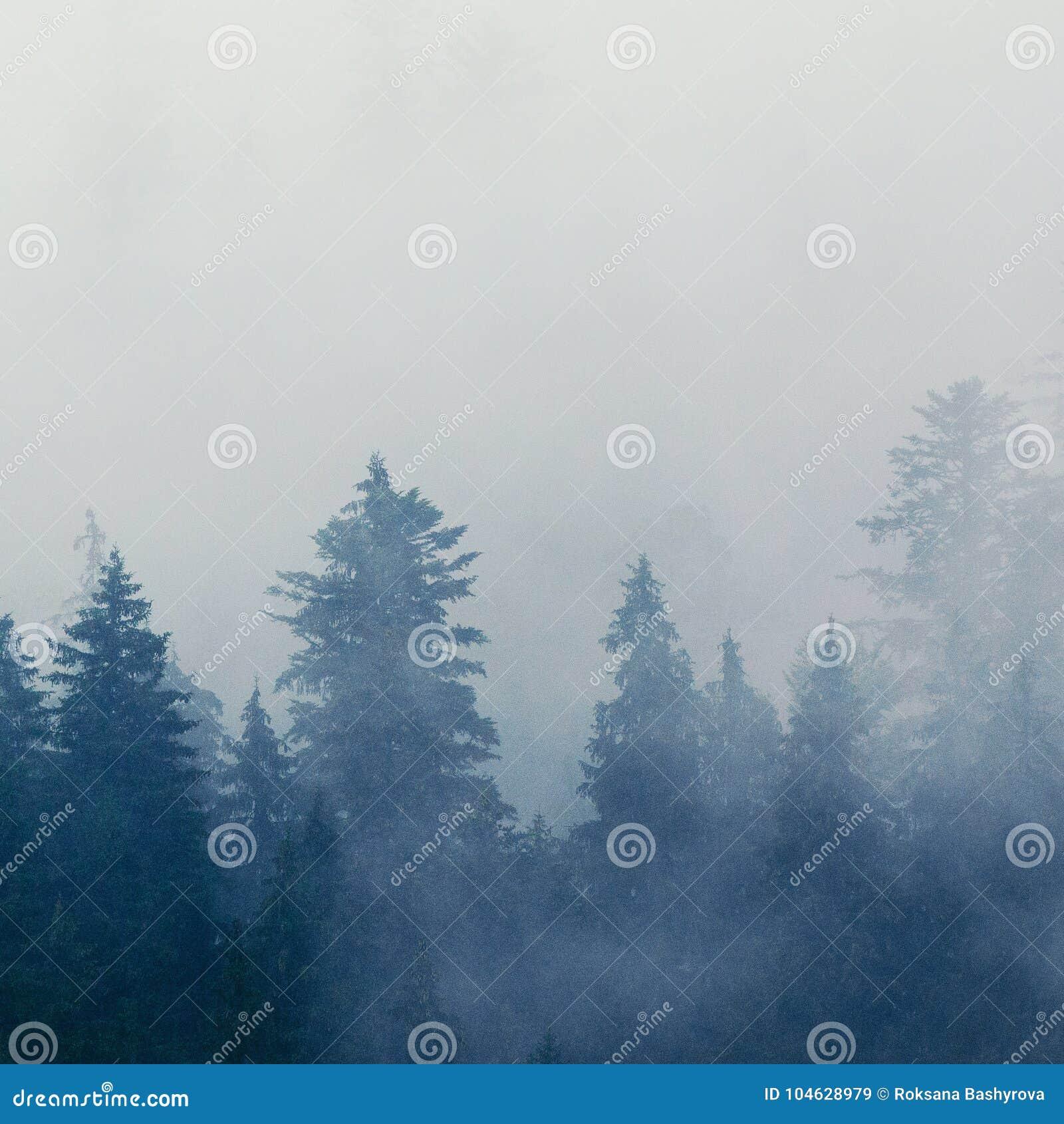 Download Mistig ochtendlandschap stock afbeelding. Afbeelding bestaande uit naald - 104628979