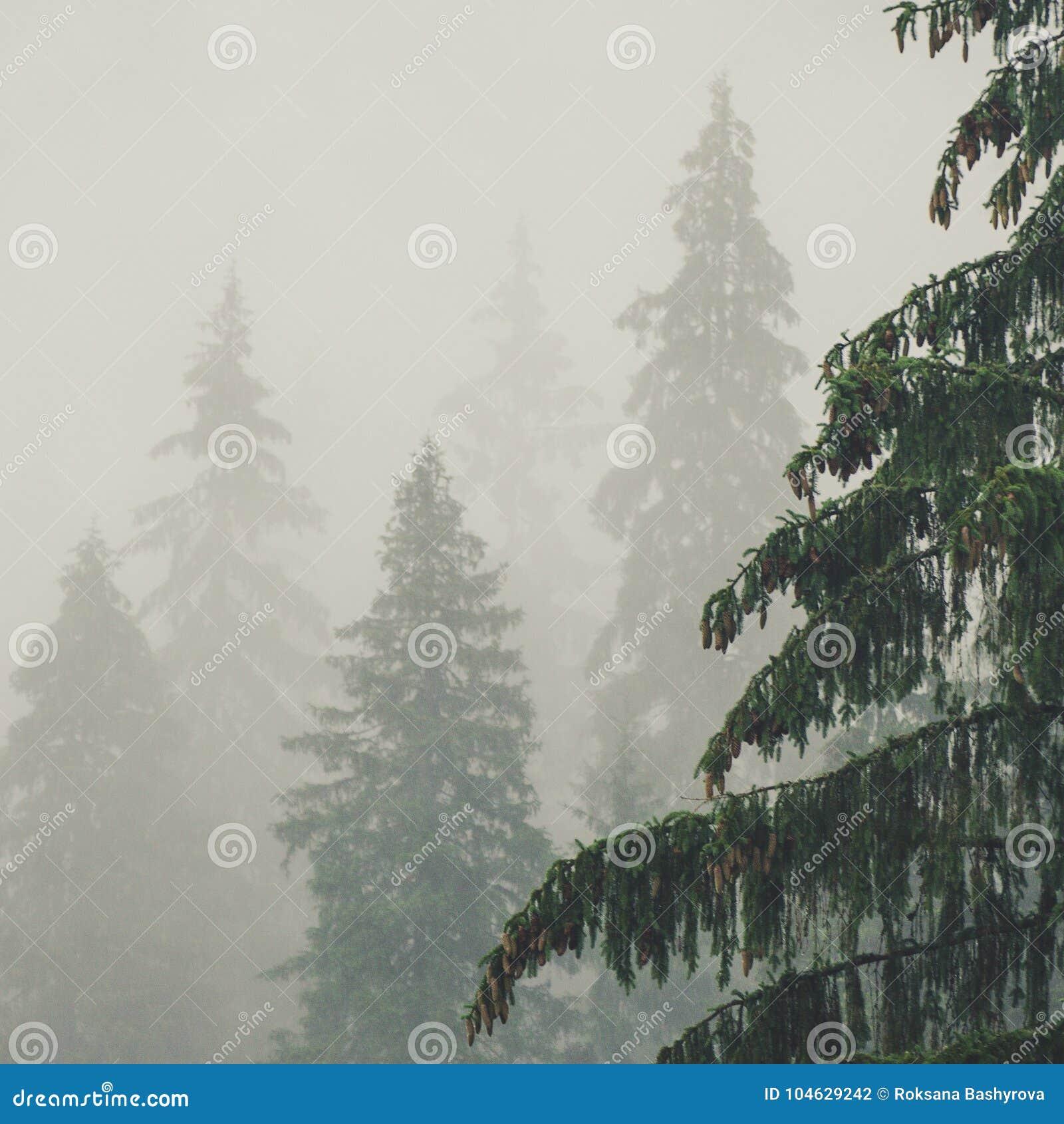 Download Mistig ochtendlandschap stock foto. Afbeelding bestaande uit licht - 104629242