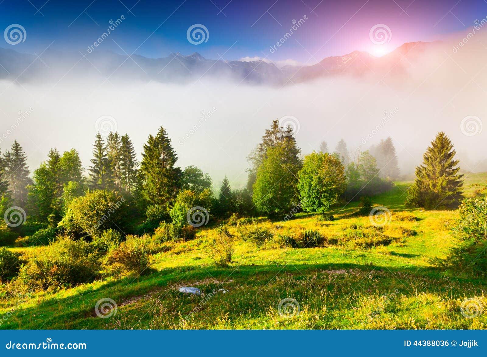 Mistige de zomerochtend in het nationale park van Triglav, dichtbij Bohi