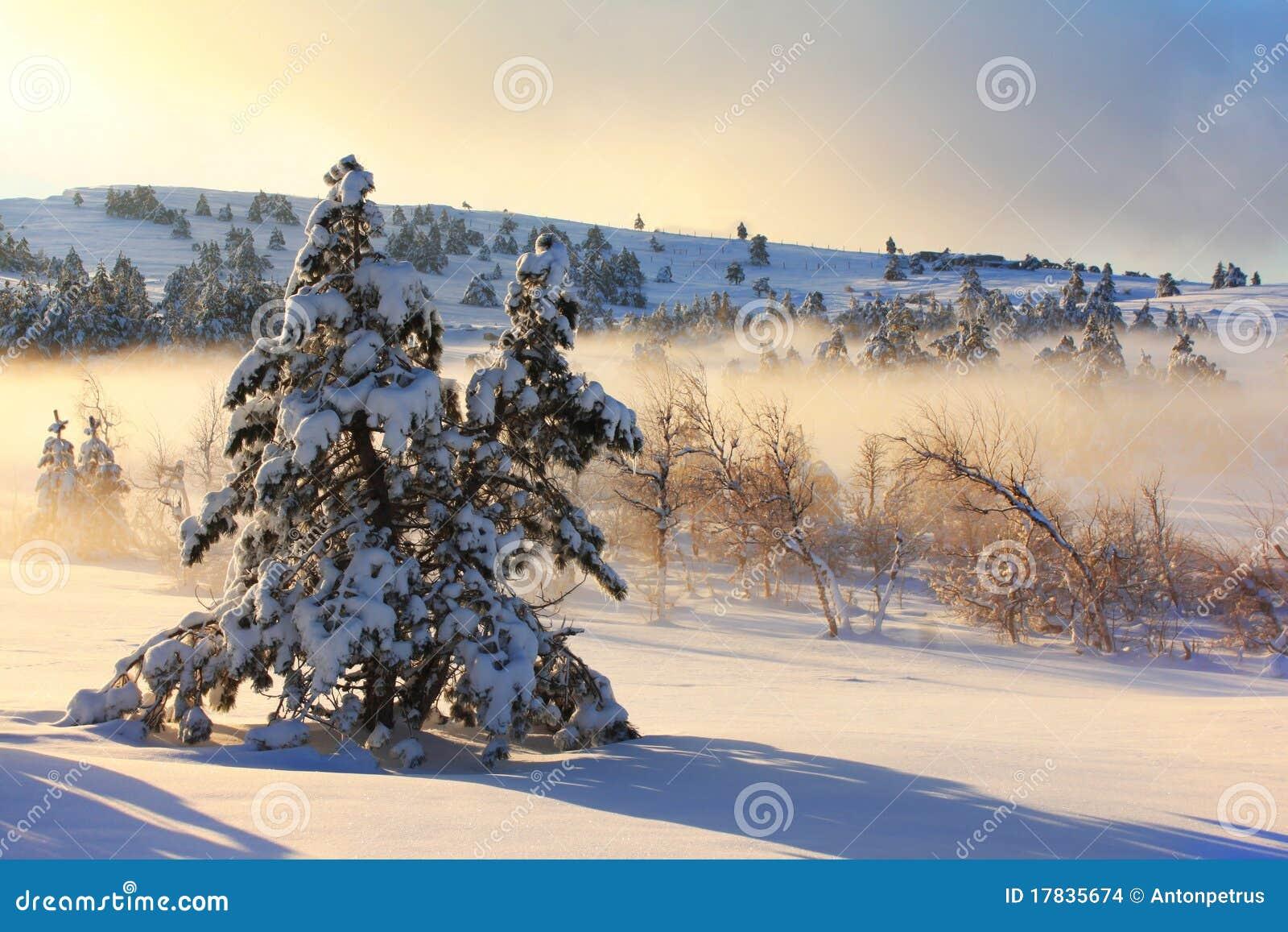 Mistige ochtend in de winter
