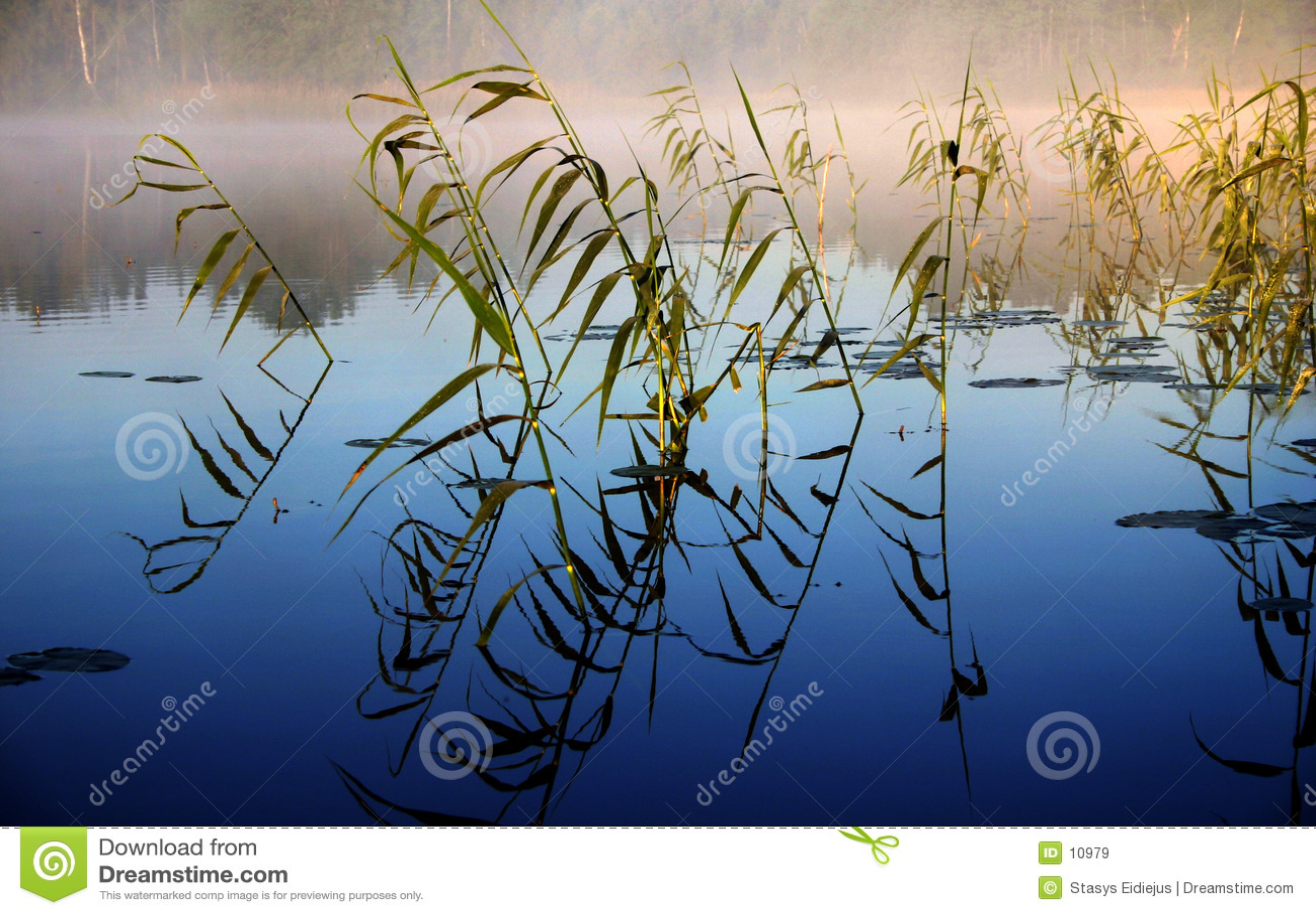 Mistige ochtend door het meer, II
