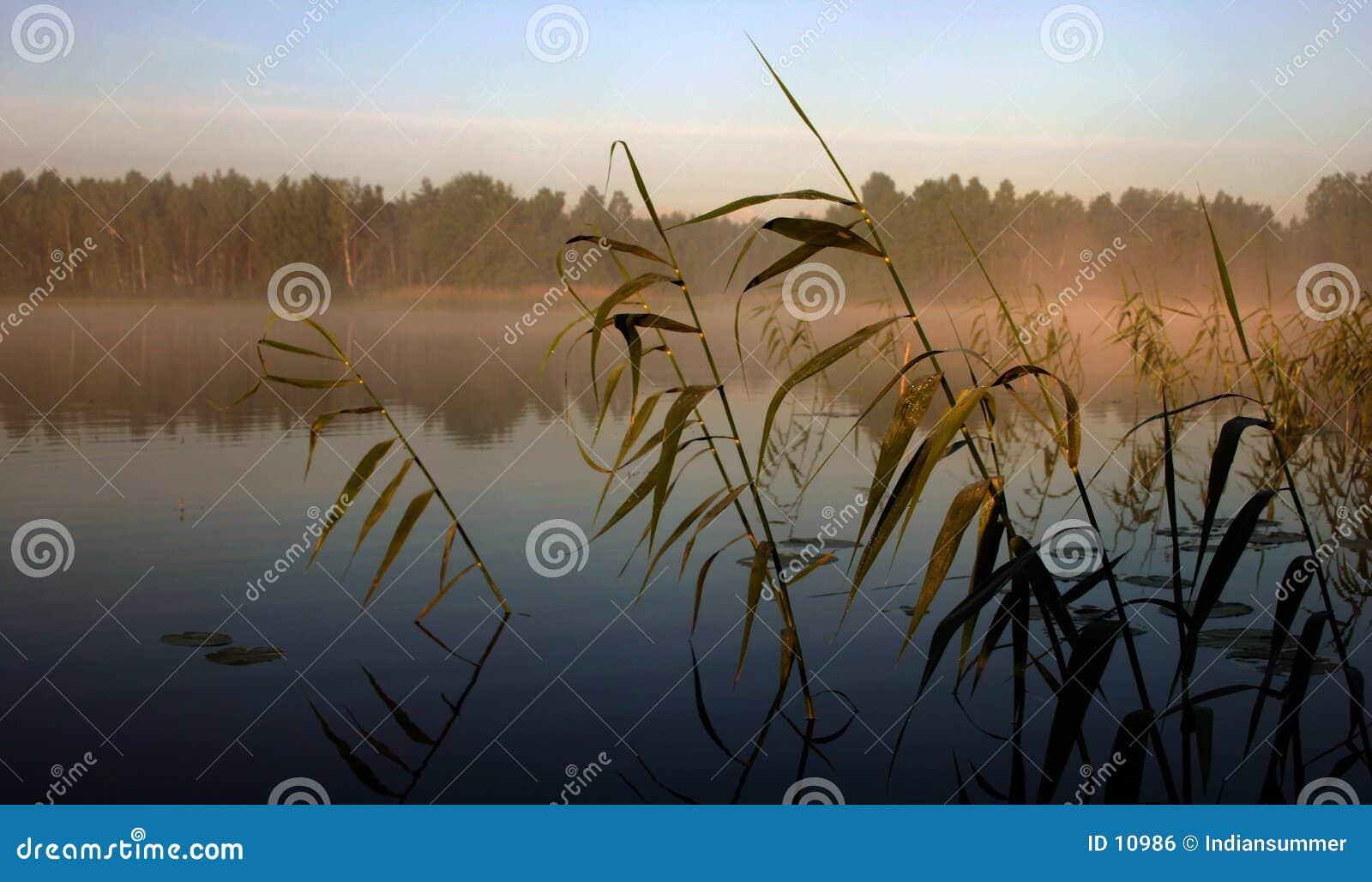 Mistige ochtend door het meer, III