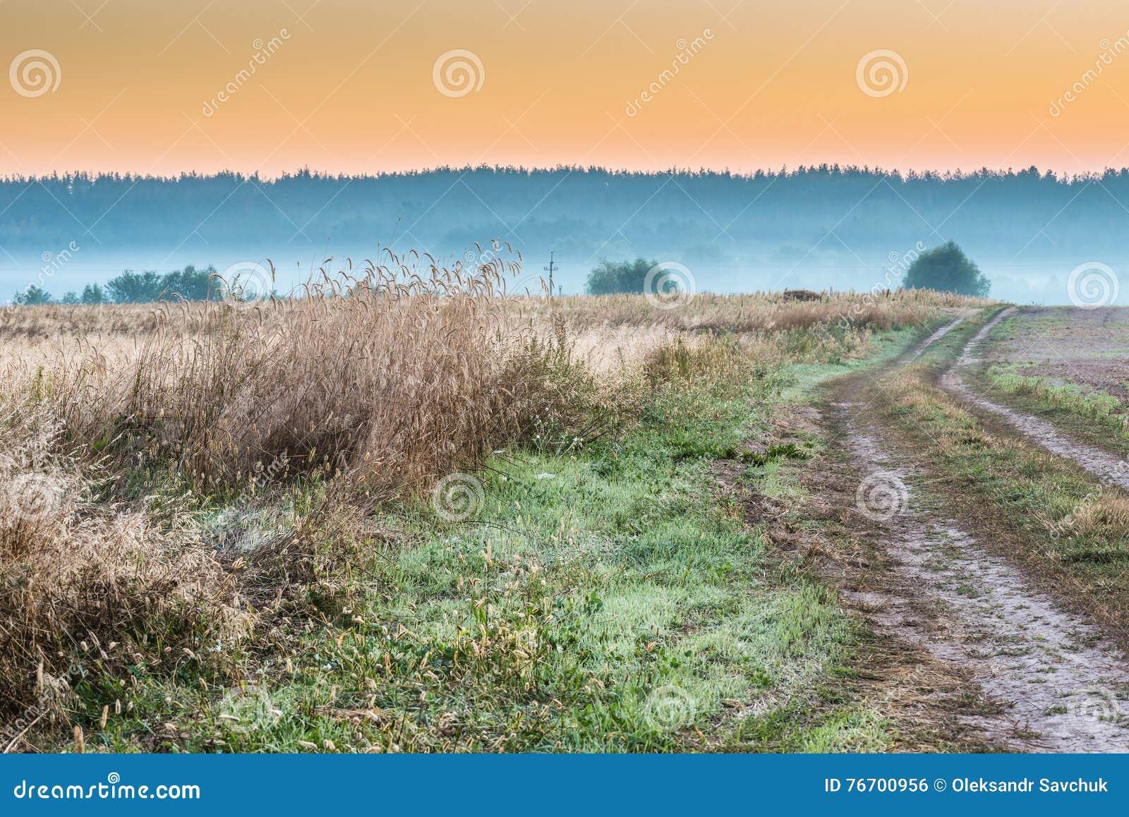 Mistige ochtend op een gebied