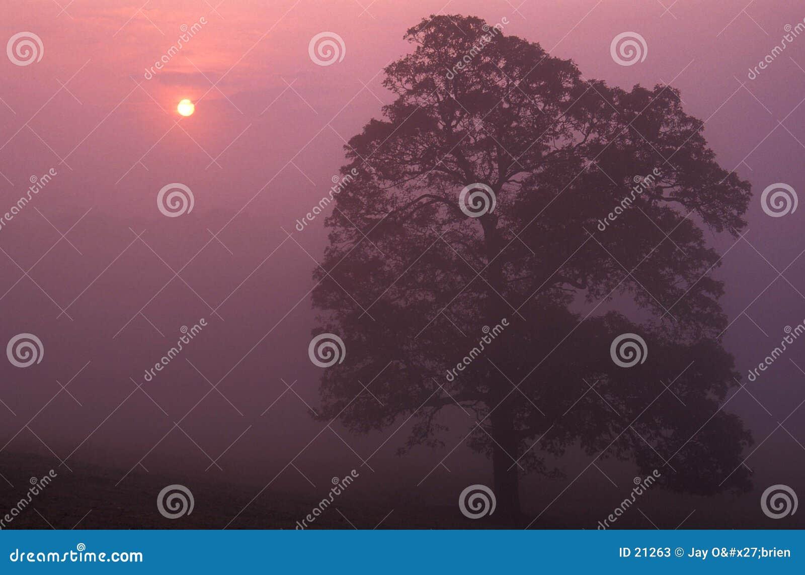 Mistige zonsopgang