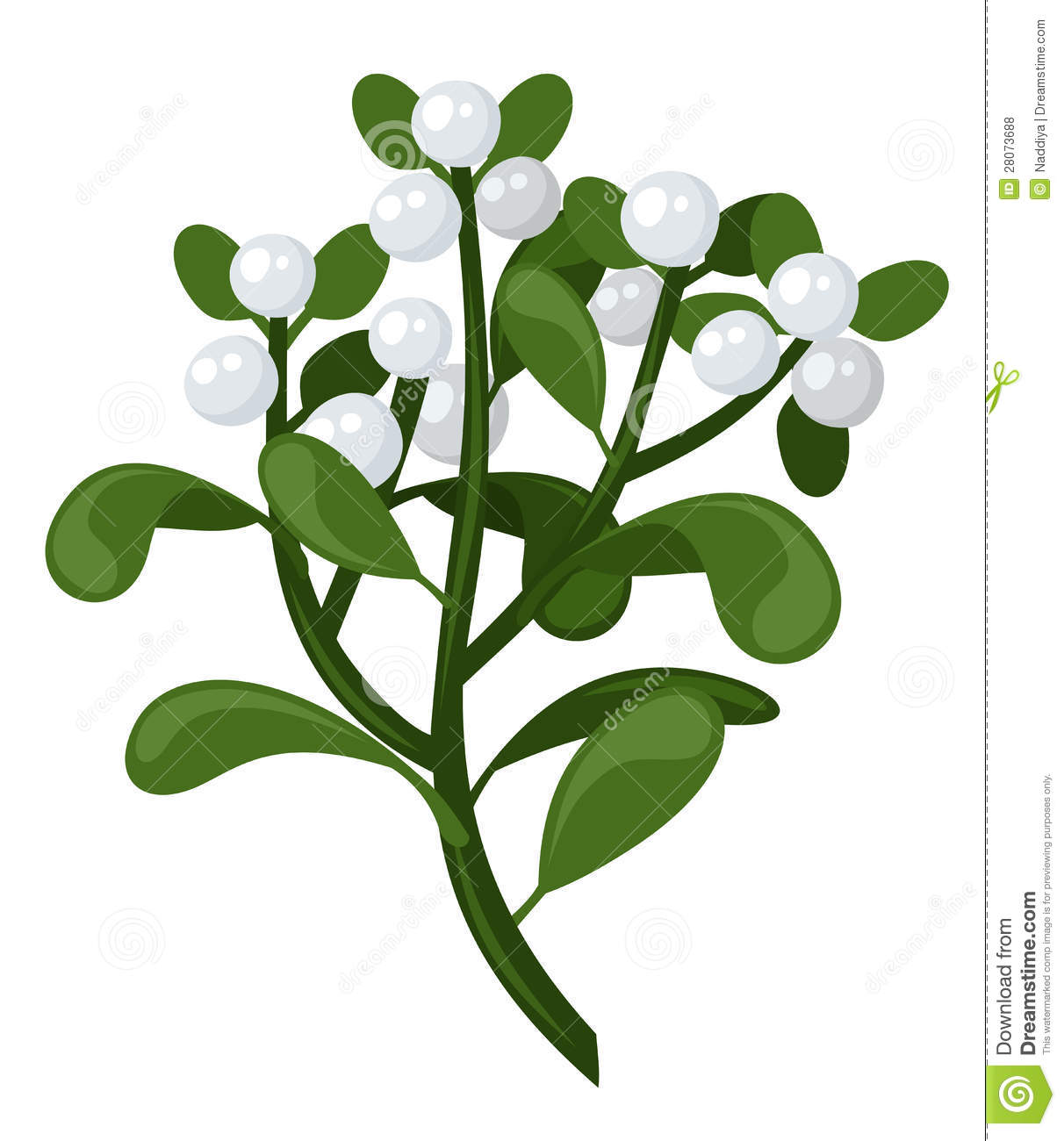 Mistletoe Branch. Vector Illustration. Royalty Free Stock Photos ...