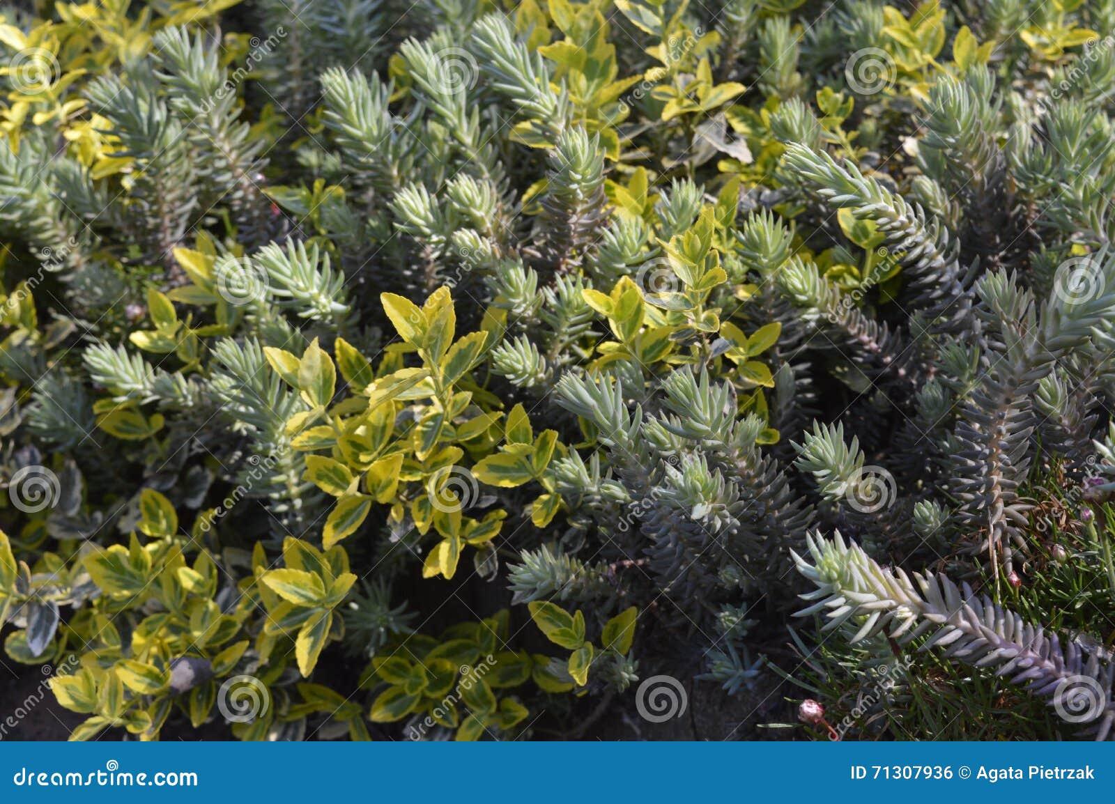Mistura de plantas verdes e de arbustos