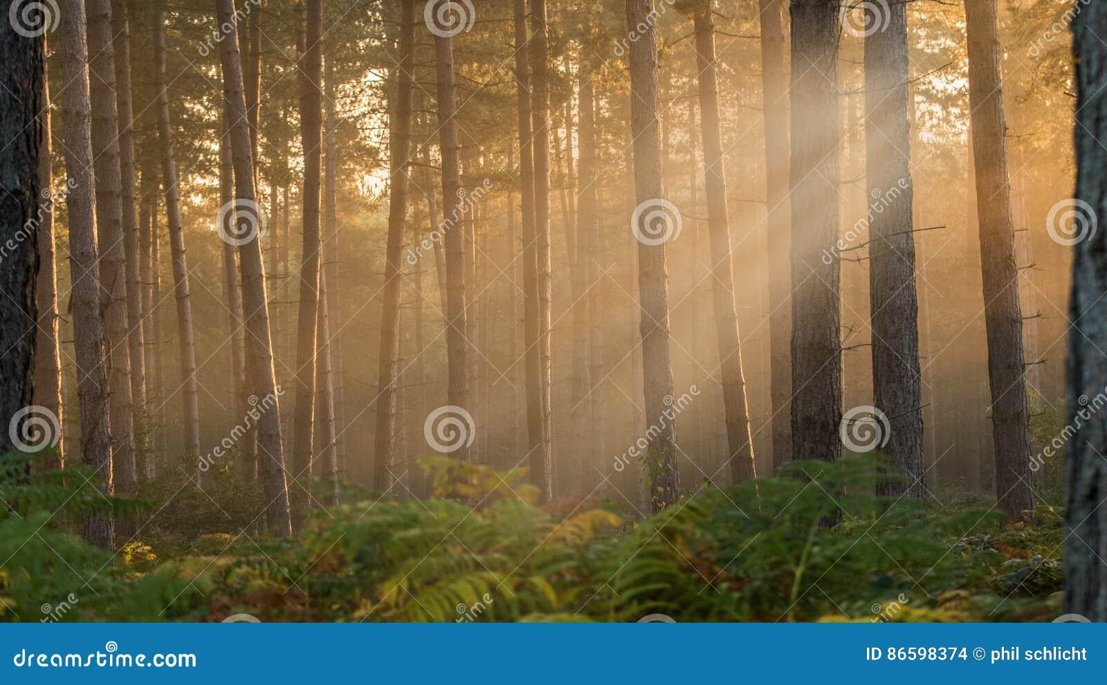 Misty δάση
