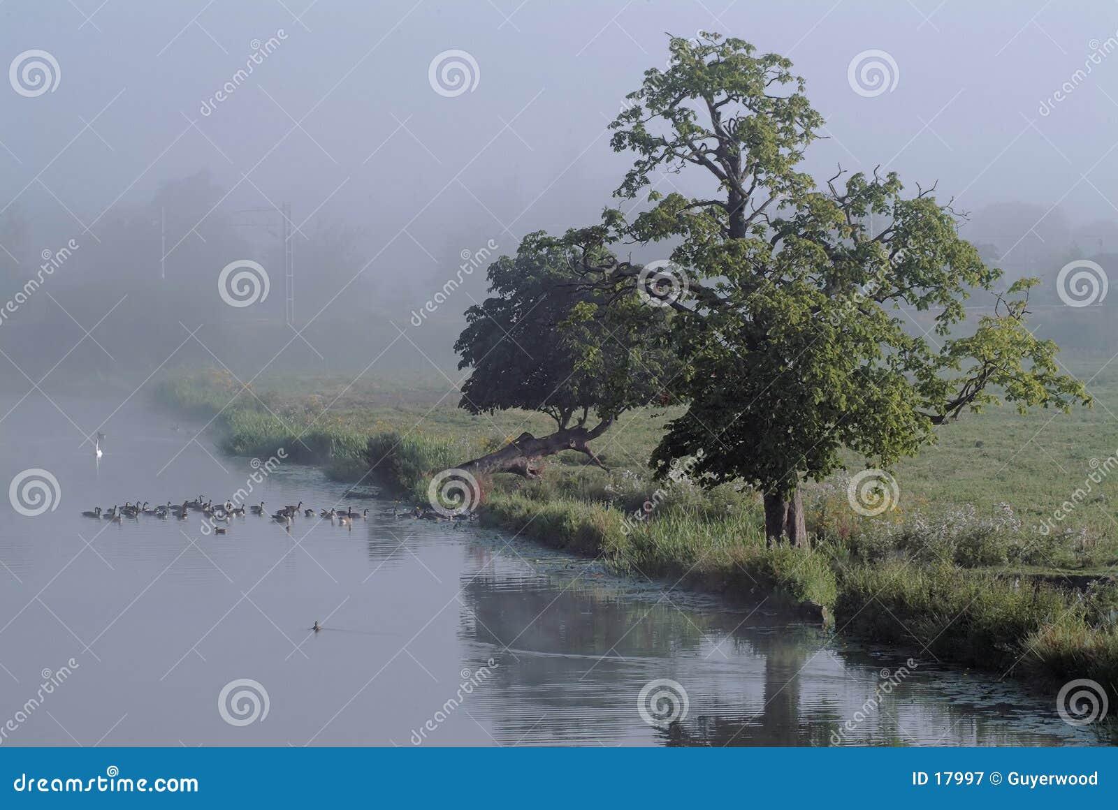 Misty όχθη ποταμού πρωινού