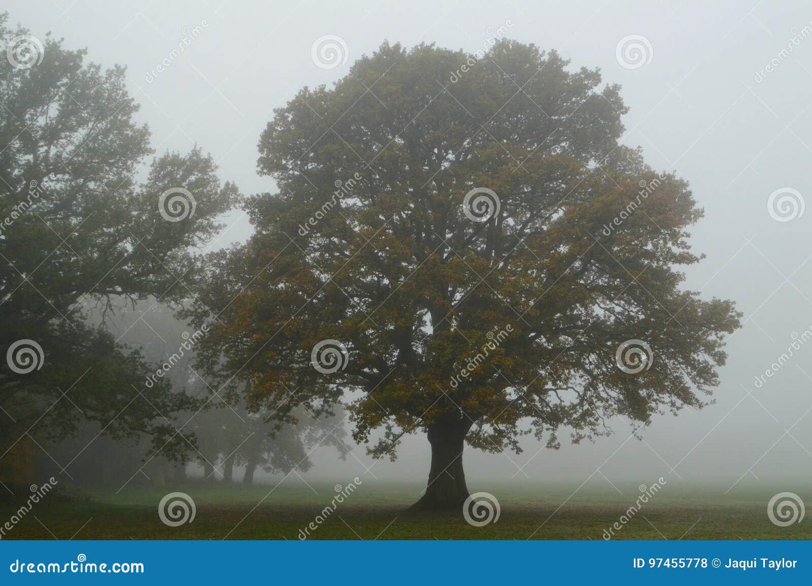 Misty autumn tree