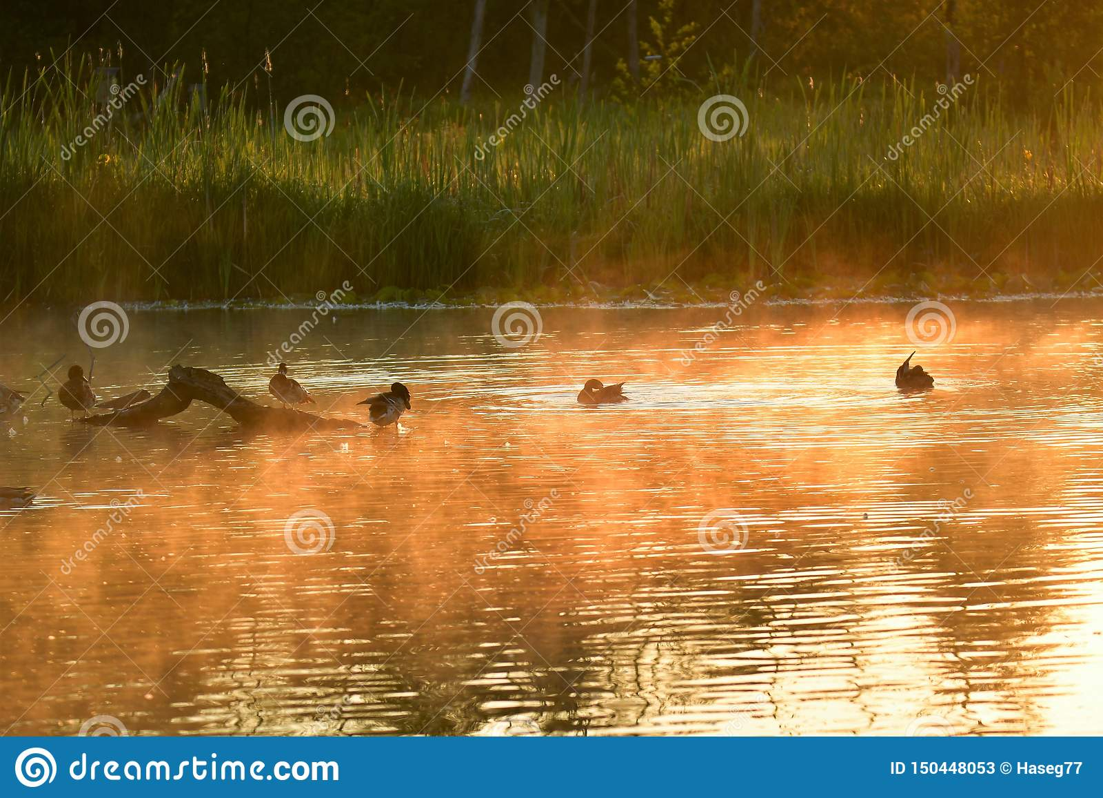 Misty Burnaby-meer