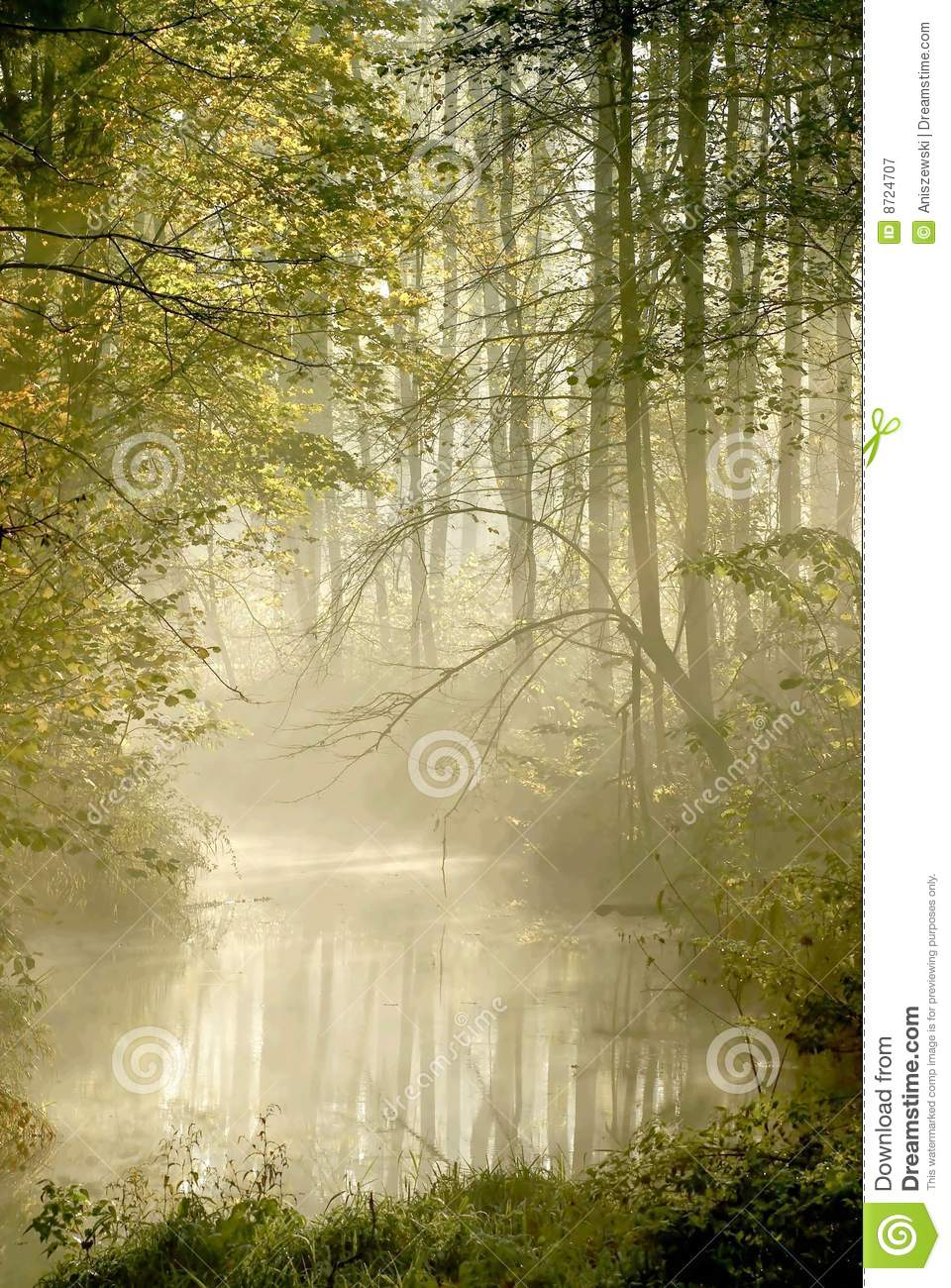 misty forest river with early morning sun rays royalty