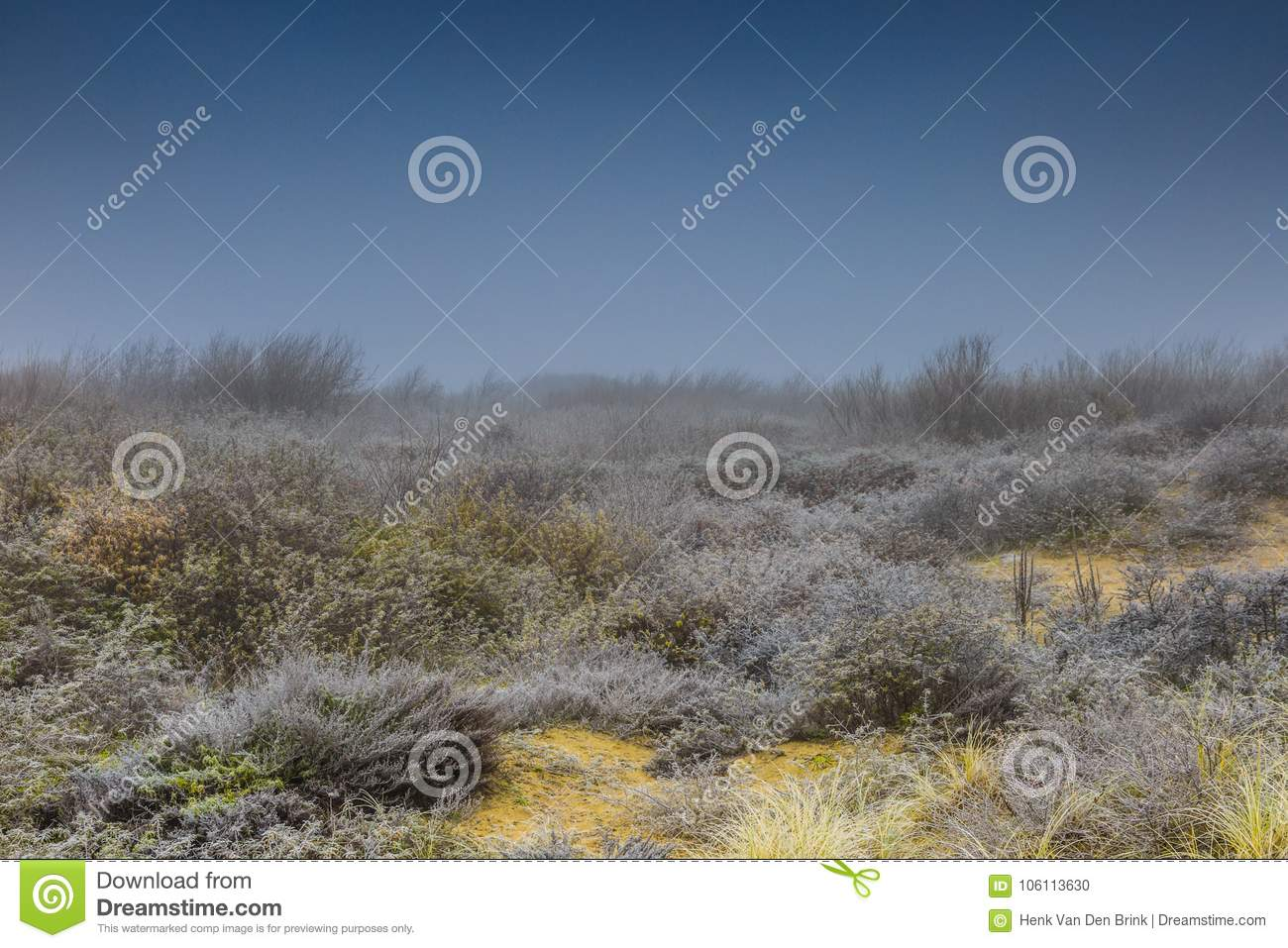 Misty Landscape With Sea Buckthorn Hippophae Rhamnoides Is A
