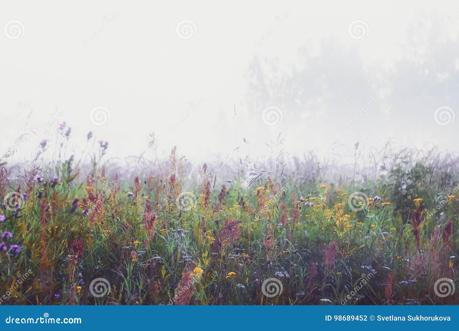 Misty Morning In The Meadow