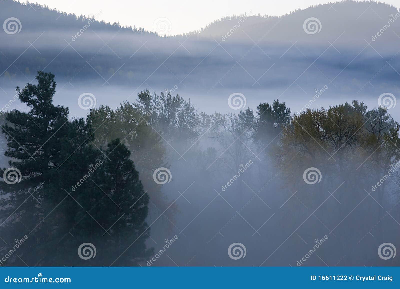 Misty Mountain Morning Stock Photo Image Of Morning 16611222
