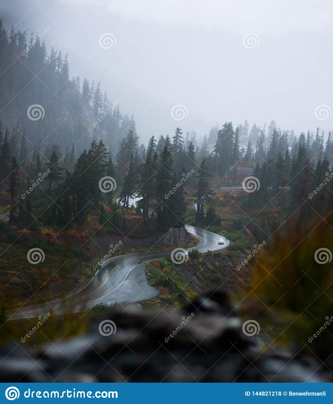 Misty Mountaintop in the Forest