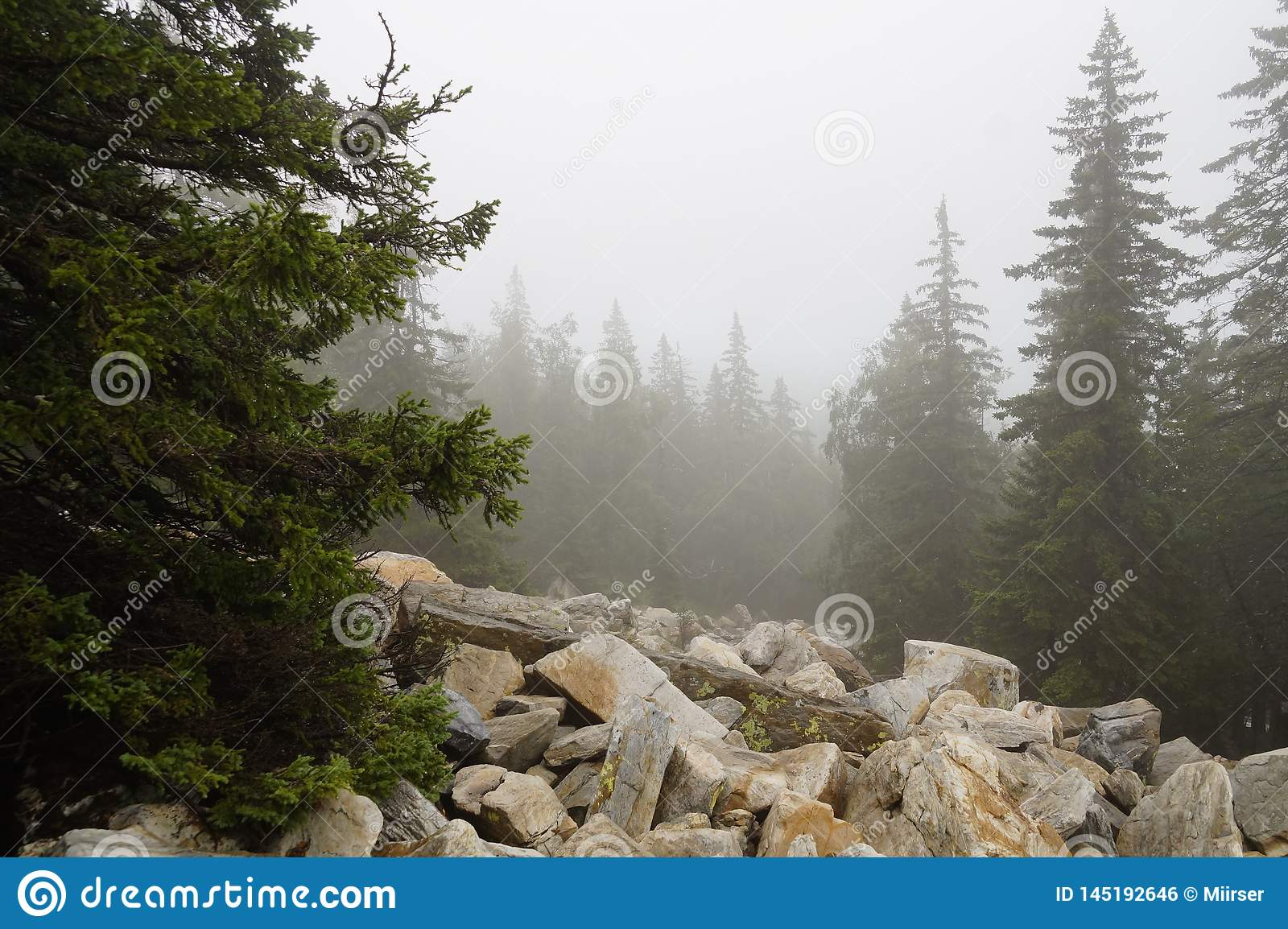 Misty and mysterious forest. The Mountain ` Zyuratkul.` Ural. Autumn