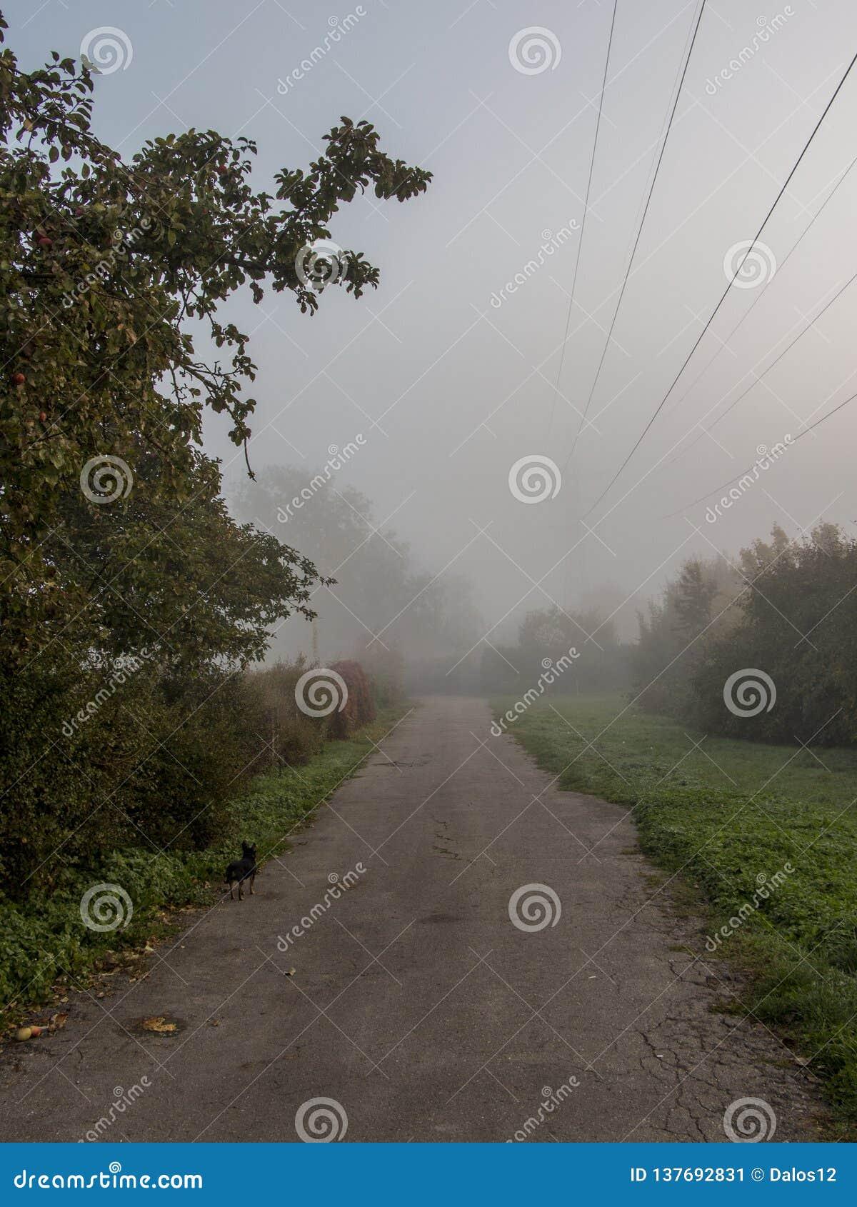 The misty road. Road Danger - fog.