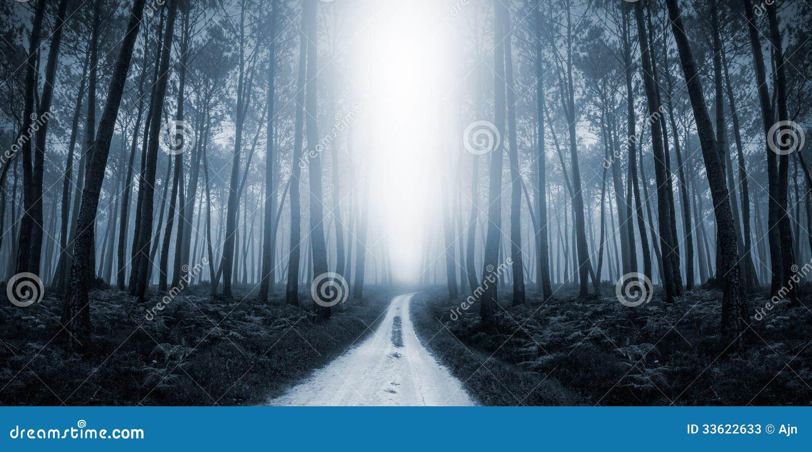 Misty Road spaventosa nella foresta