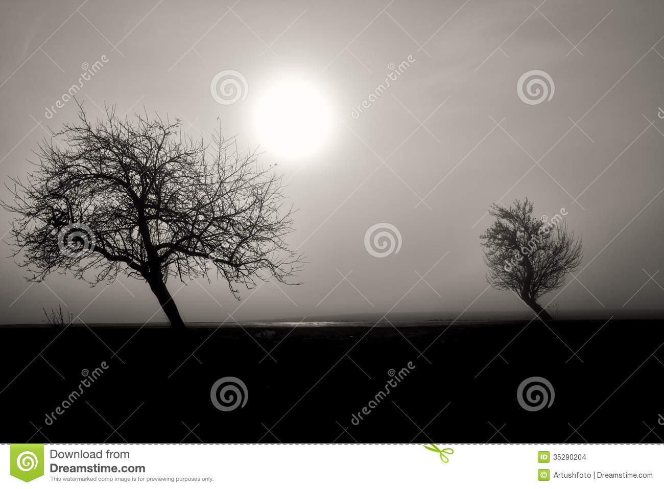 Black And White Misty : Misty silhouette of two trees stock images image
