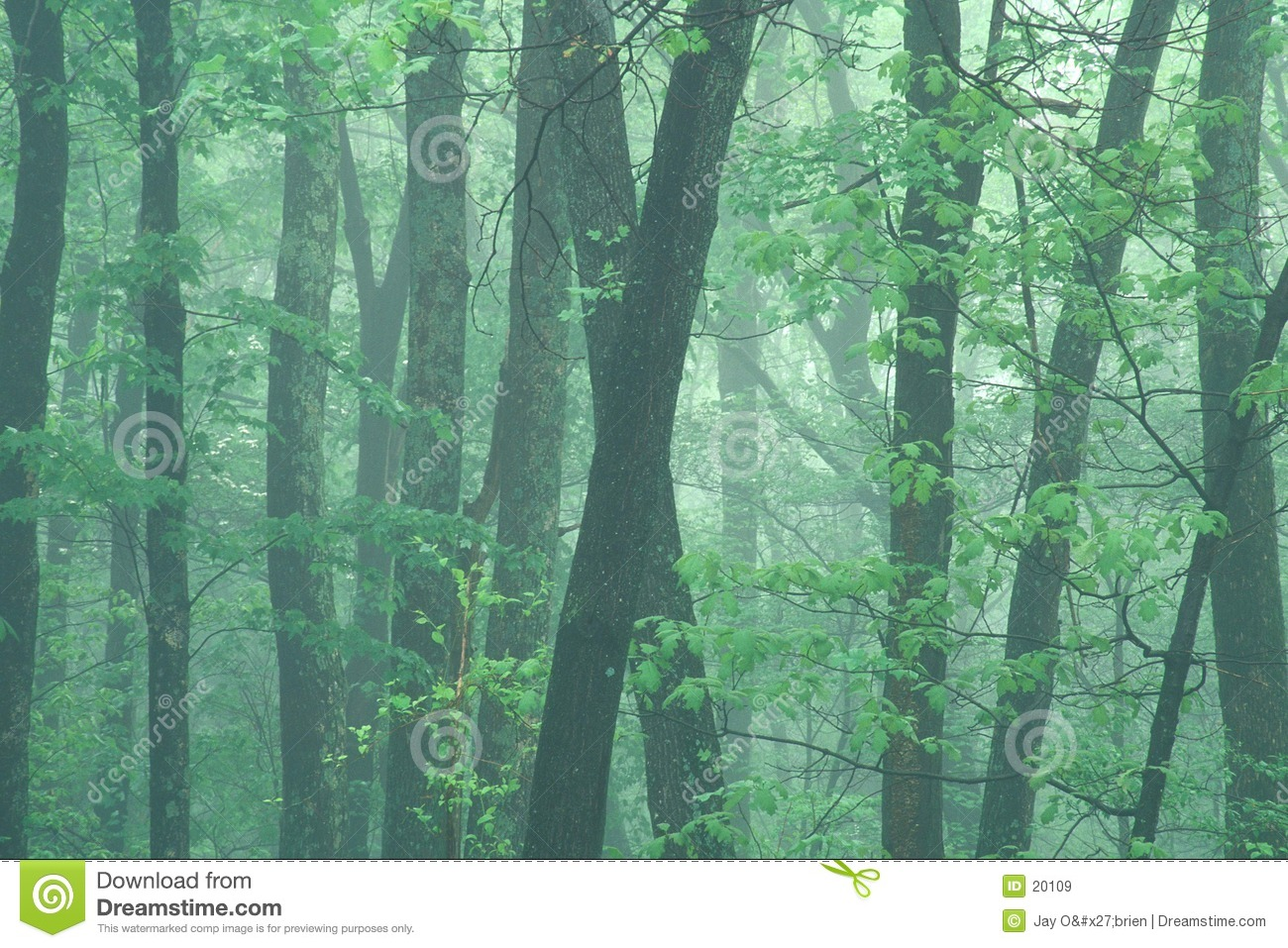 Misty spring morning