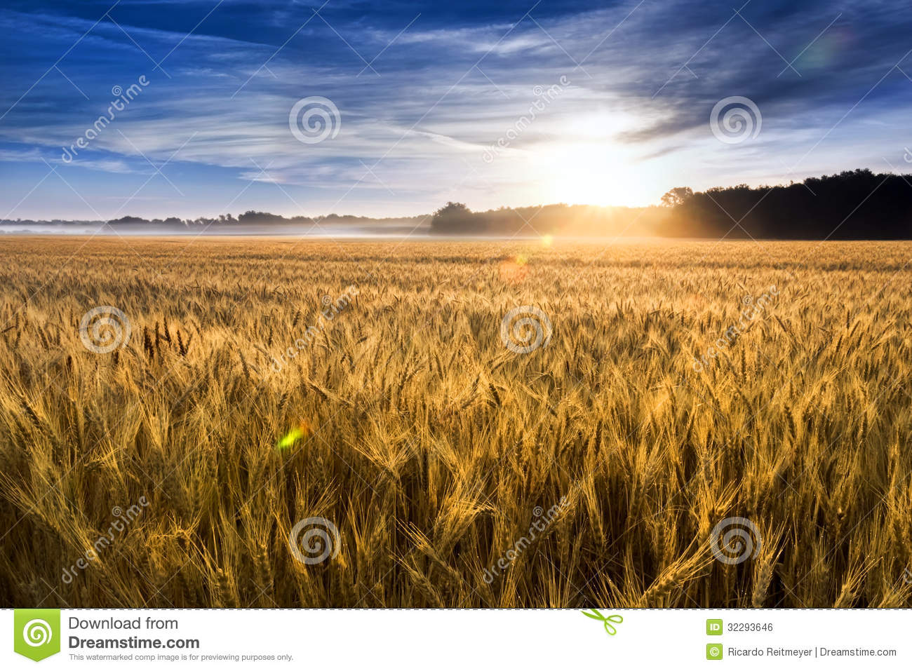 Misty Sunrise Over Golden Wheat Field in Central K