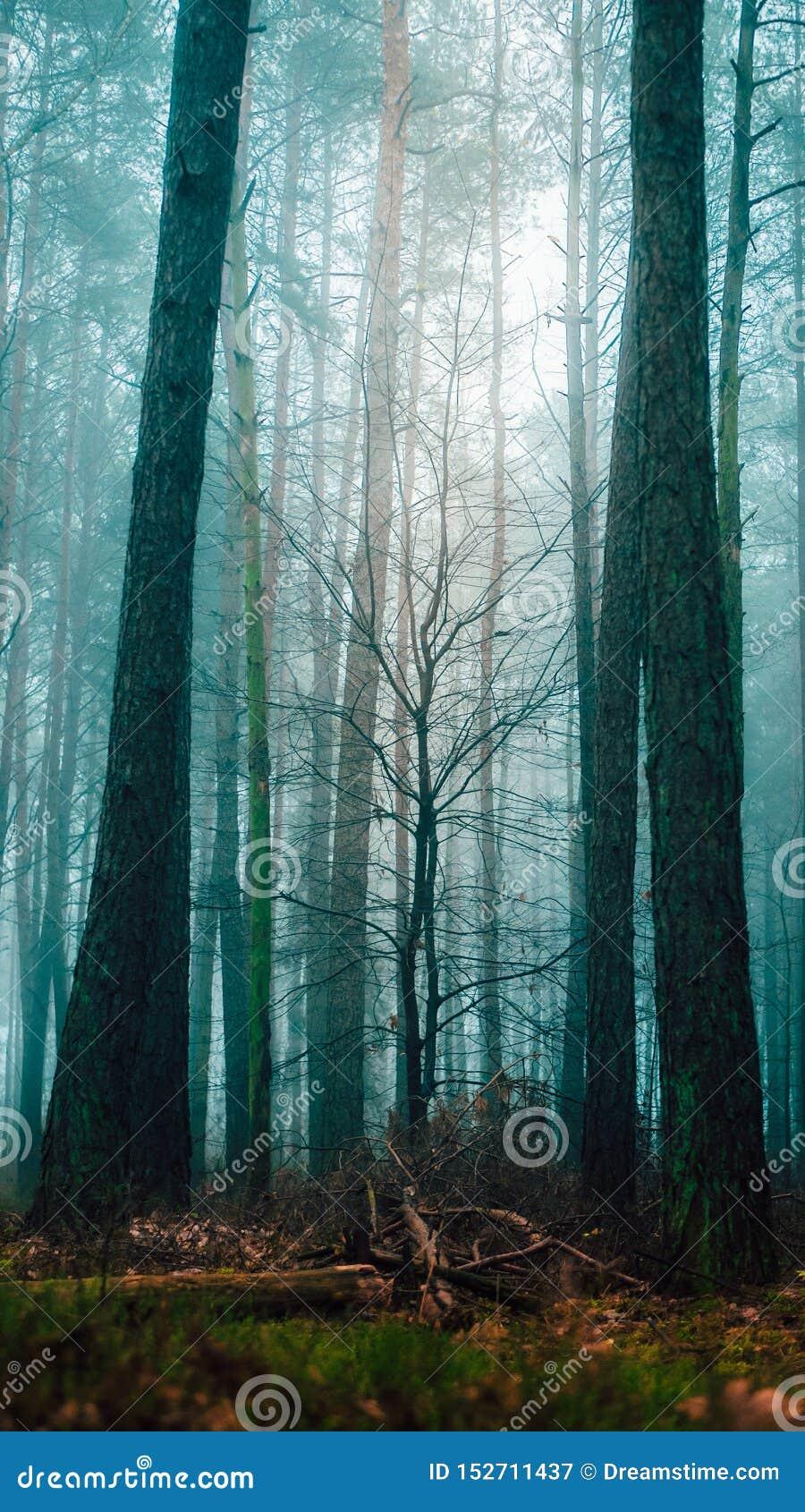 Misty tree in moody forest