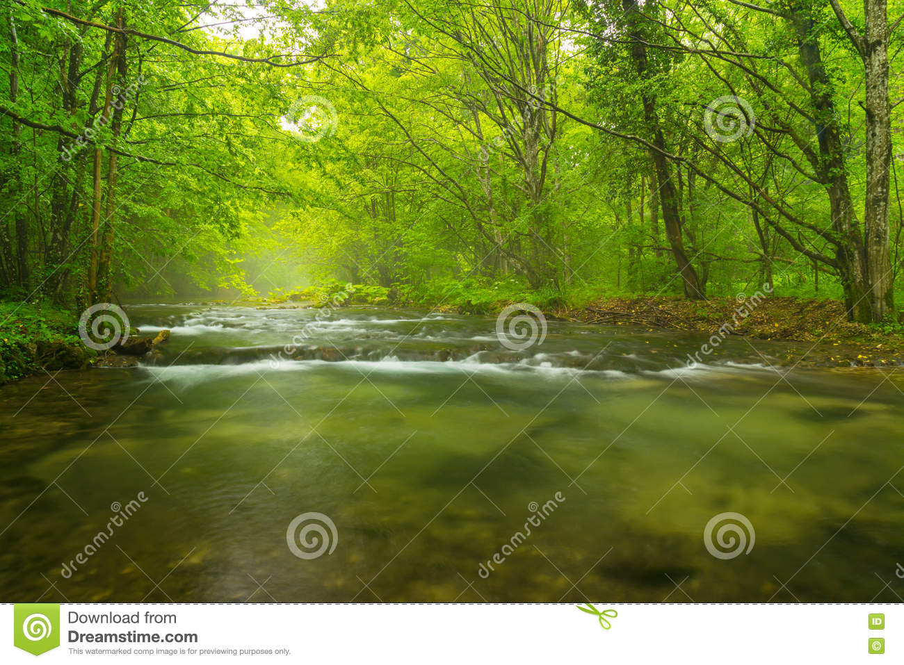 Misty Green Forest Nature River Beautiful 1ziw: Misty Wild River In The Forest In Spring Stock Photo