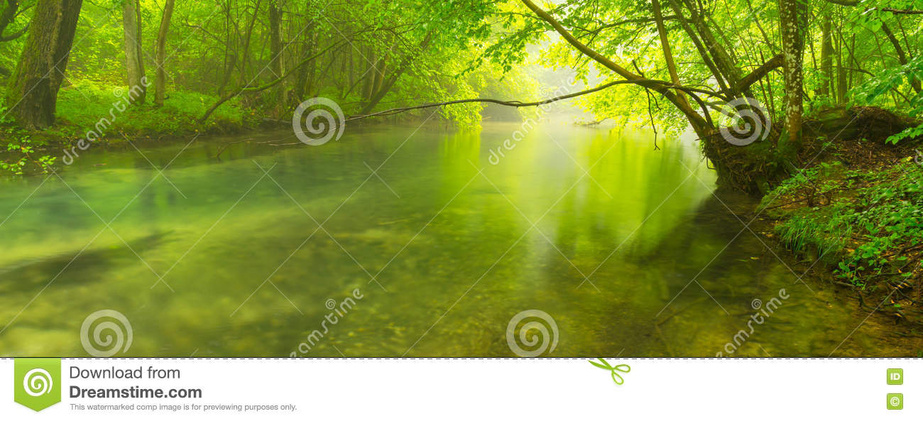 Misty Green Forest Nature River Beautiful 1ziw: Misty Wild River In The Forest In Spring Stock Image