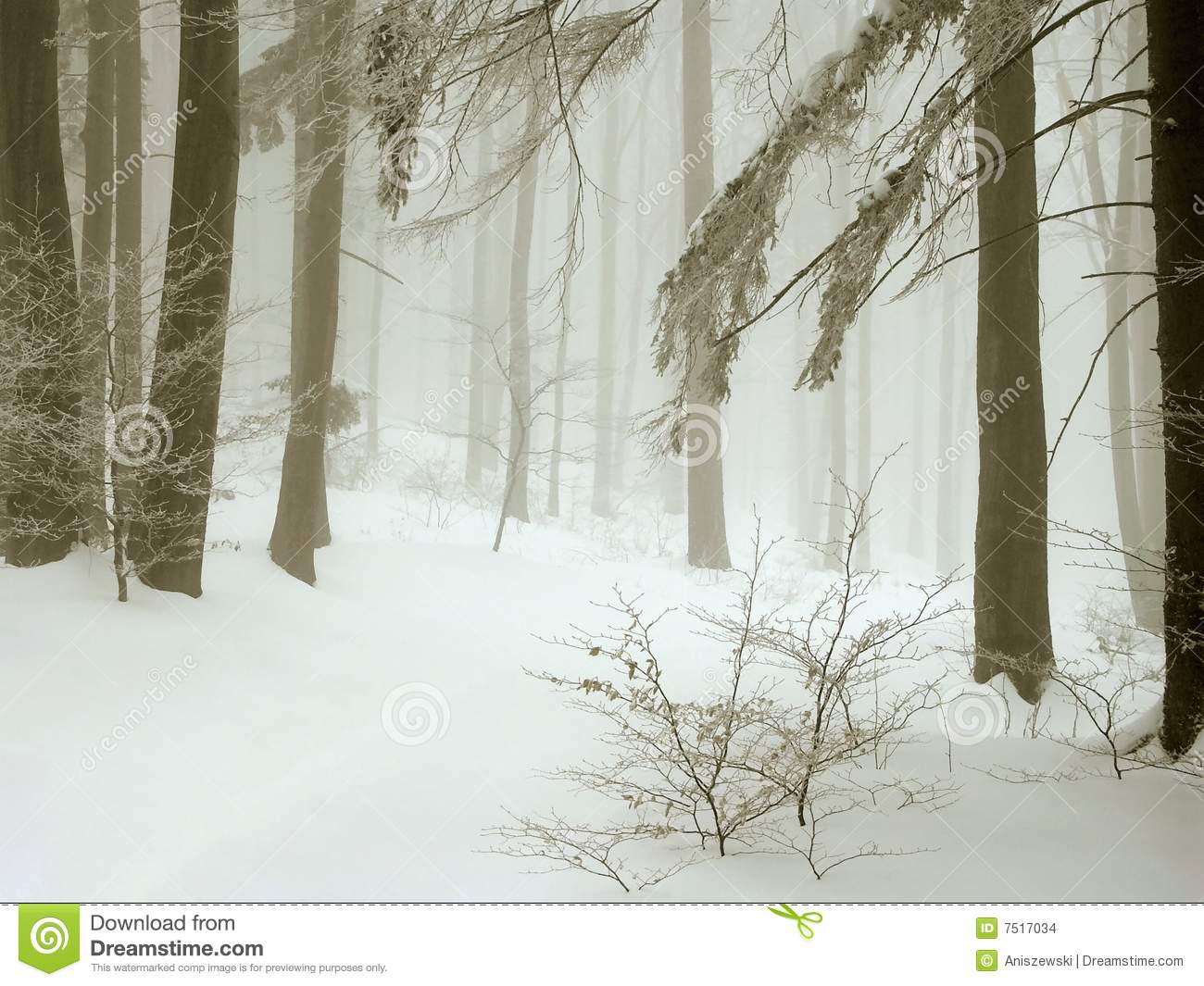 misty winter forest, fresh snow and fog