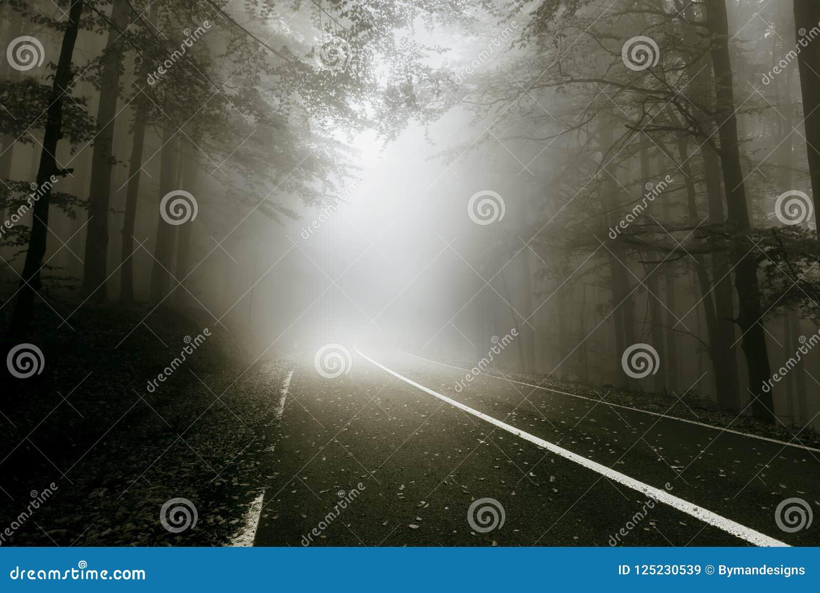Mistyczna droga przez lasu