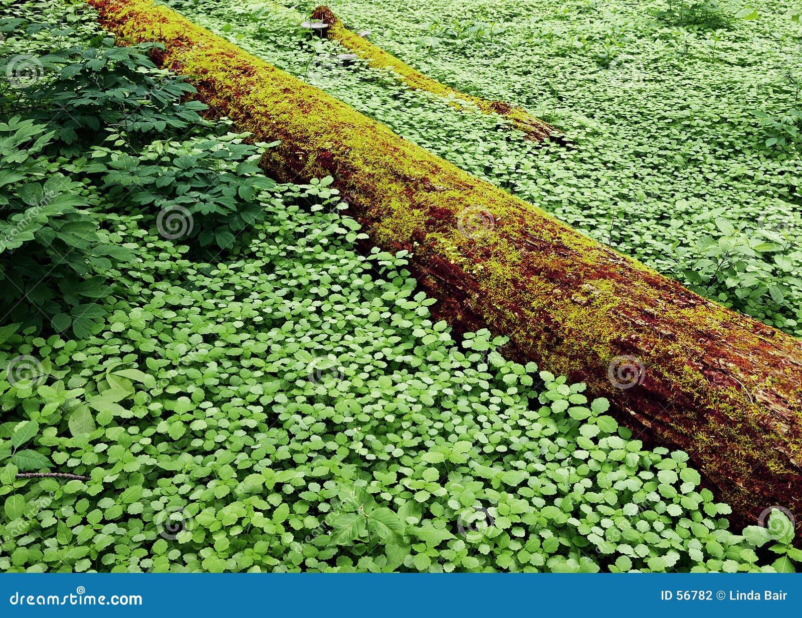 Mit Teppich Ausgelegter Wald Stockfotografie  Bild 56782