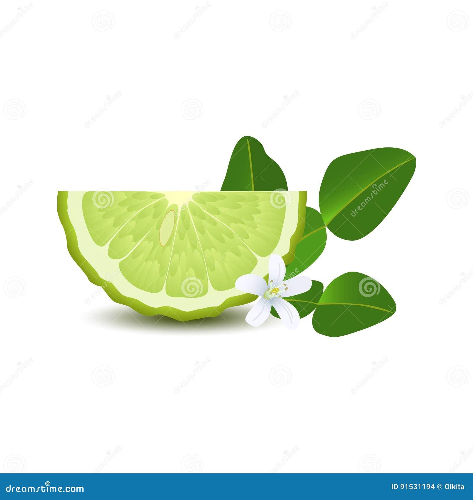 Mitad Aislada De La Bergamota Jugosa Del Color Verde Del Círculo Con ...