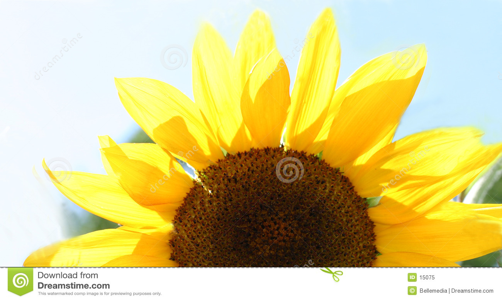Mitad de una flor