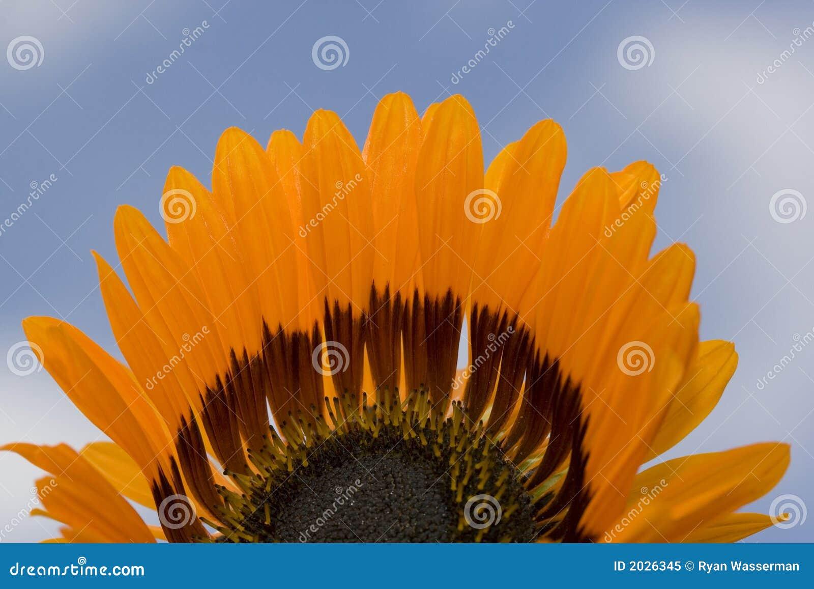 Mitad de una flor que muestra con el fondo del cielo azul