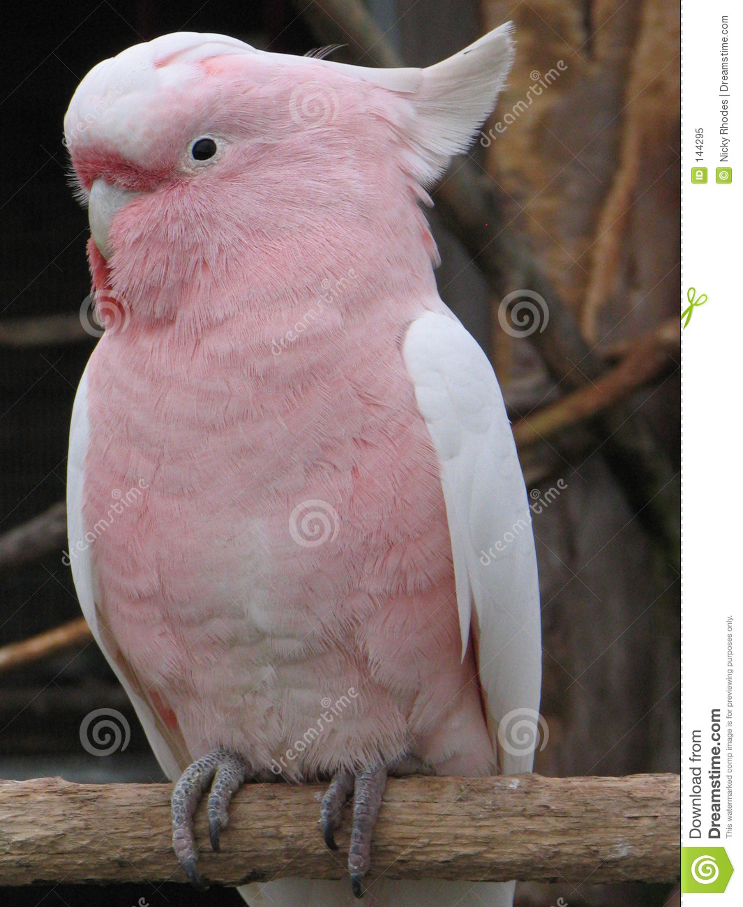 male-and-female-pink-cockatoos-alyssa-milano-charmed-naked-ass
