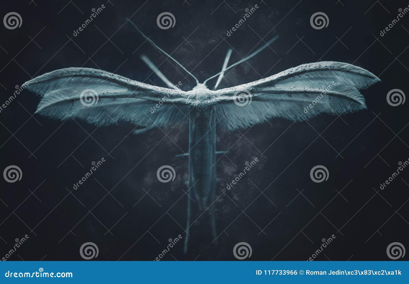Mite blanche de plume dans l obscurité