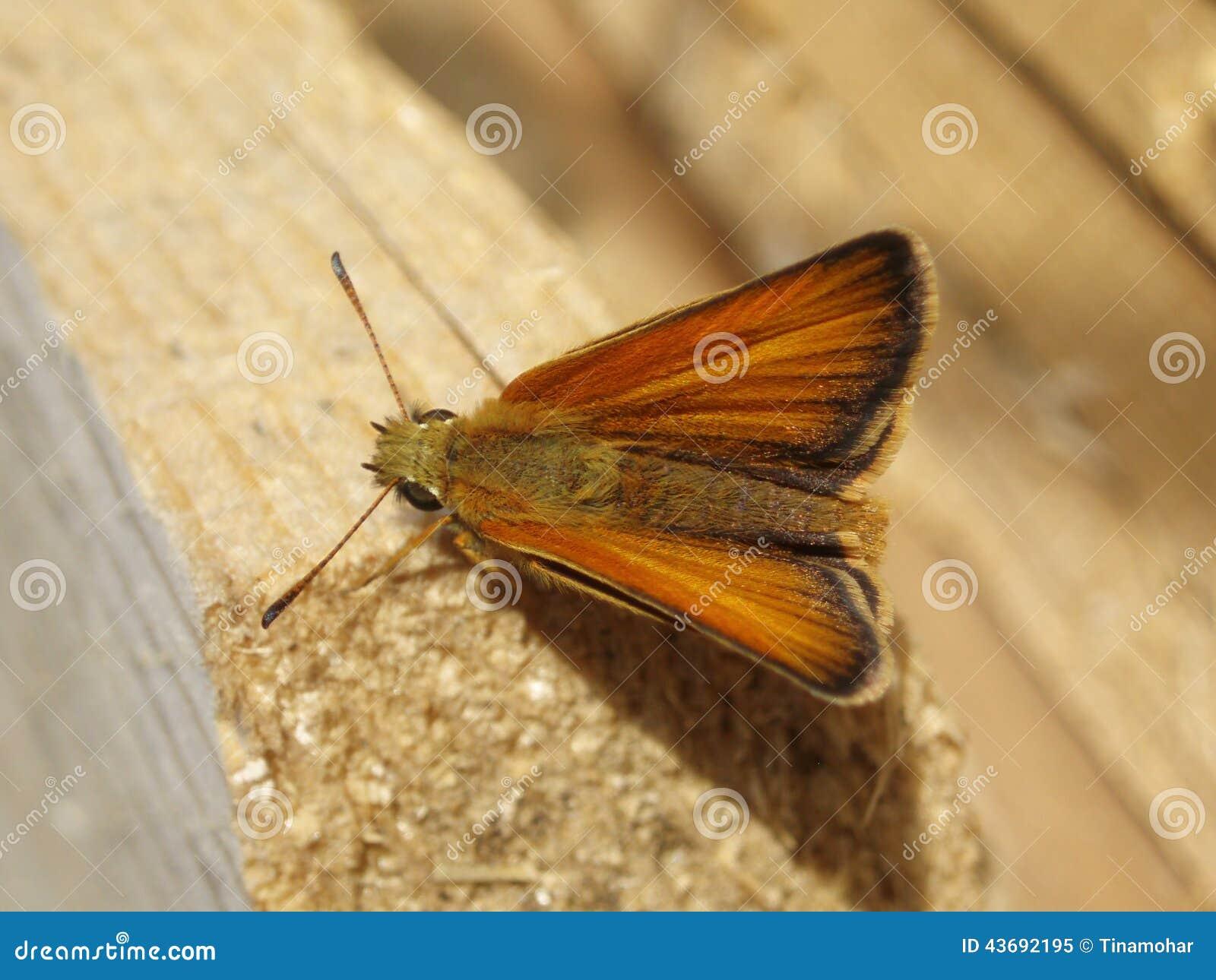 Mite De Brown Se Reposant Sur Le Bois Photo stock Image 43692195 # Traitement Mites Bois