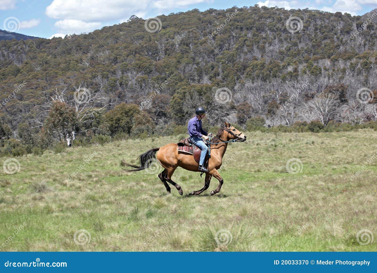 Mitfahrer des weiblichen Pferds