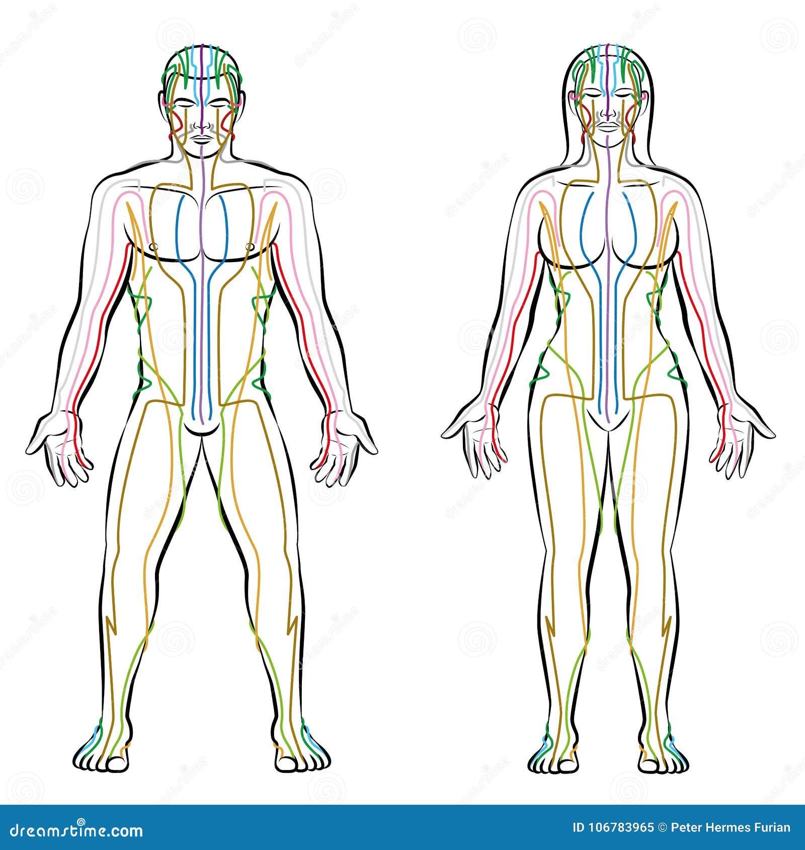 Schön Diagramm Blase Lage Weiblicher Körper Zeitgenössisch ...