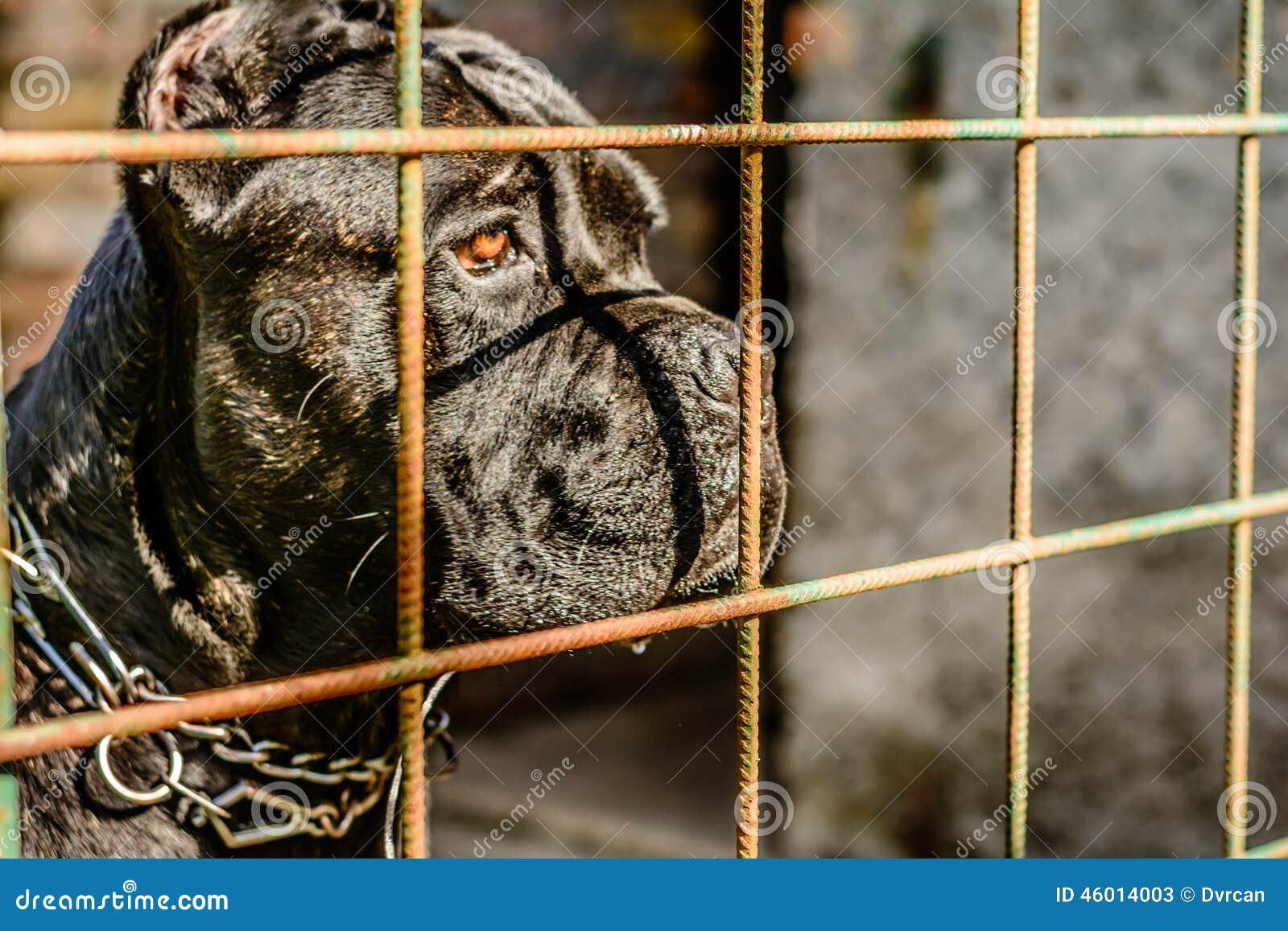 Mittelhund, der durch das fance schaut